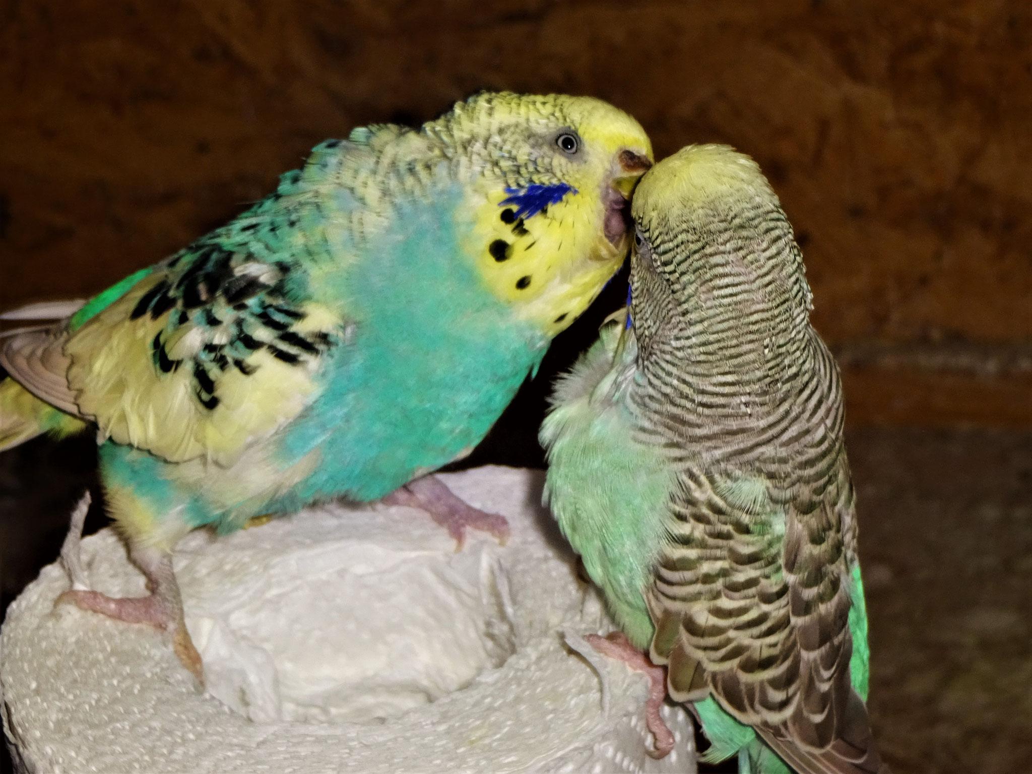Tiffi und Baby Lana