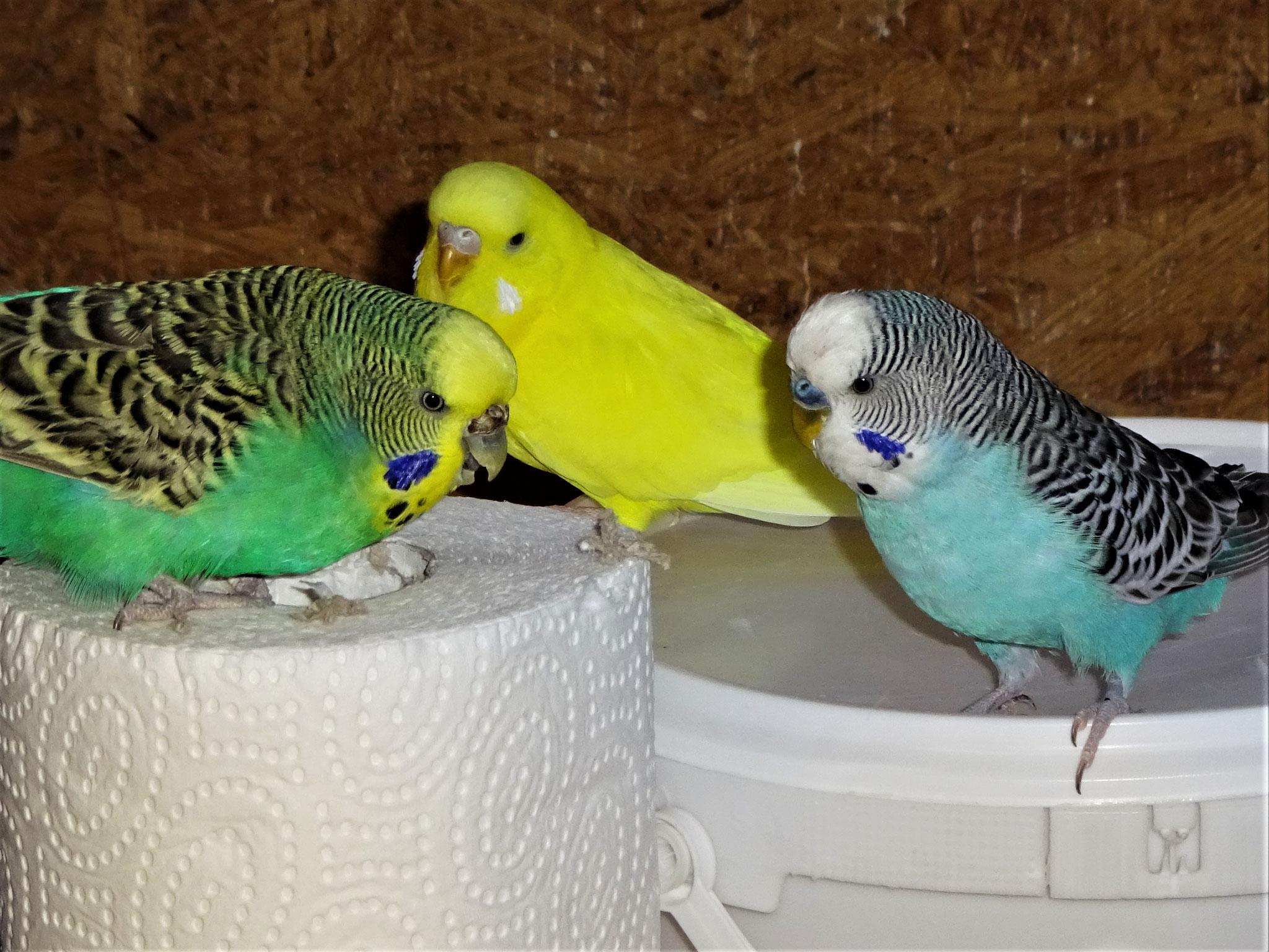 """Bandit:""""...hallo Pepe und Lotte, darf ich hier mitspielen?..."""