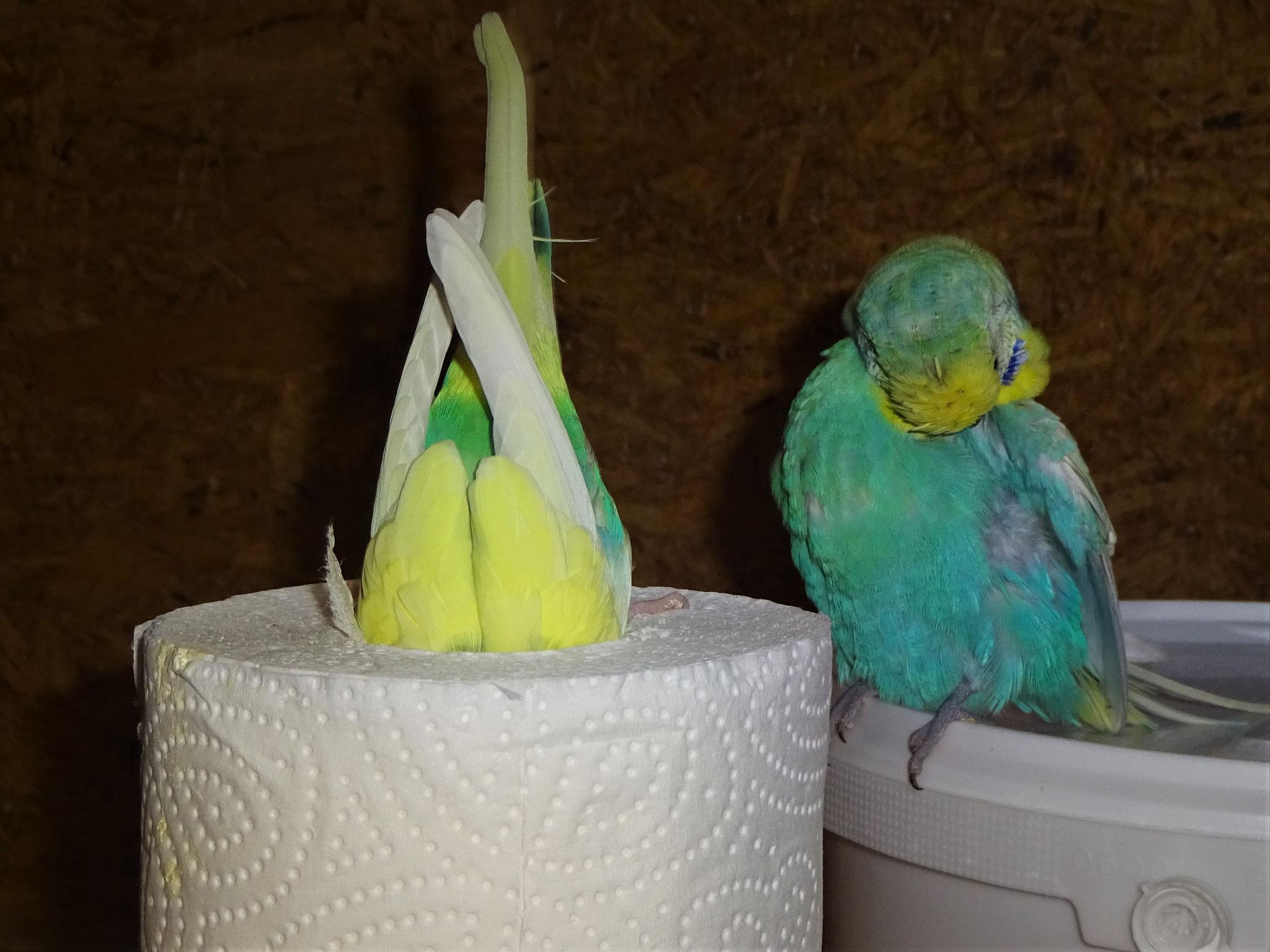 Miss Patty taucht ein, ...Flo putzt sich... ;-) ...