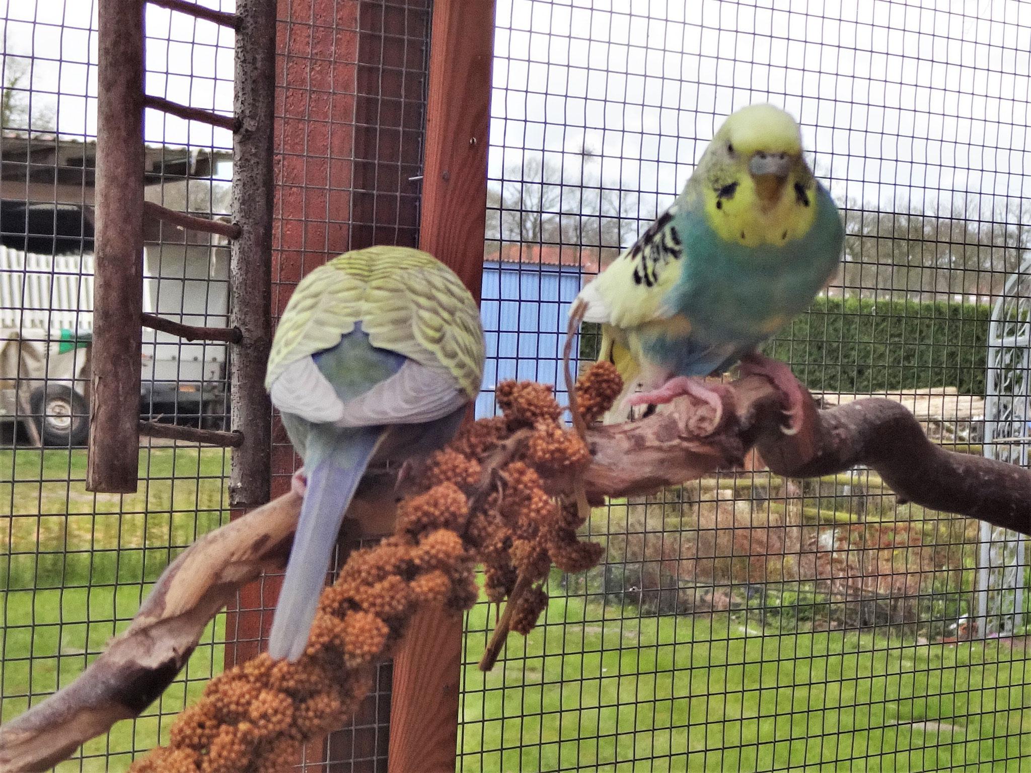 Tini und Tiffi