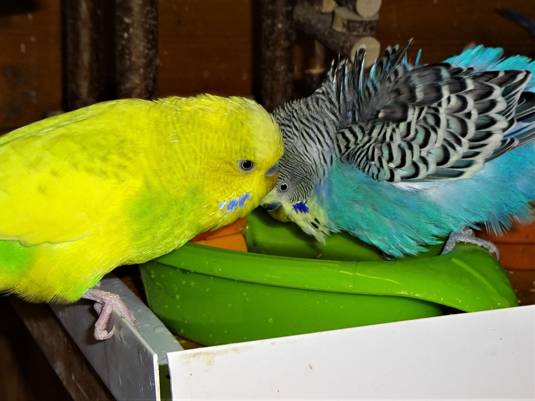 """...jetzt """"teilen"""" sich Jordy und Benny die Wanne ;-) ..."""
