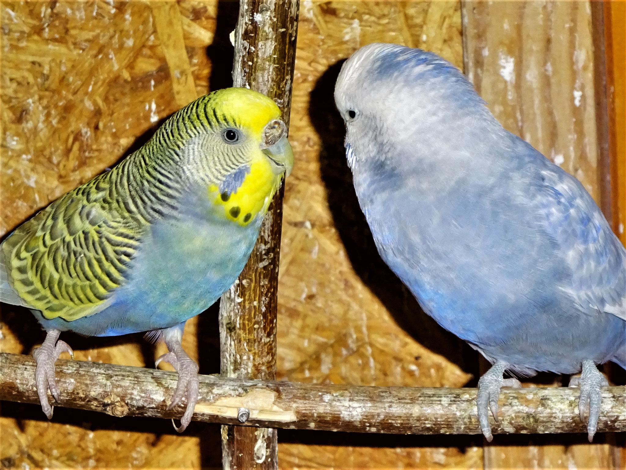 Tini und Monty beim flirten