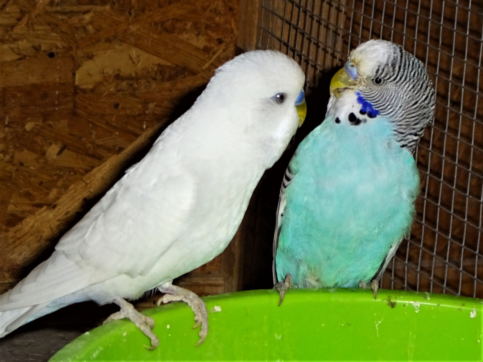 Vergil und Rudi haben leicht Meinungsverschiedenheiten...