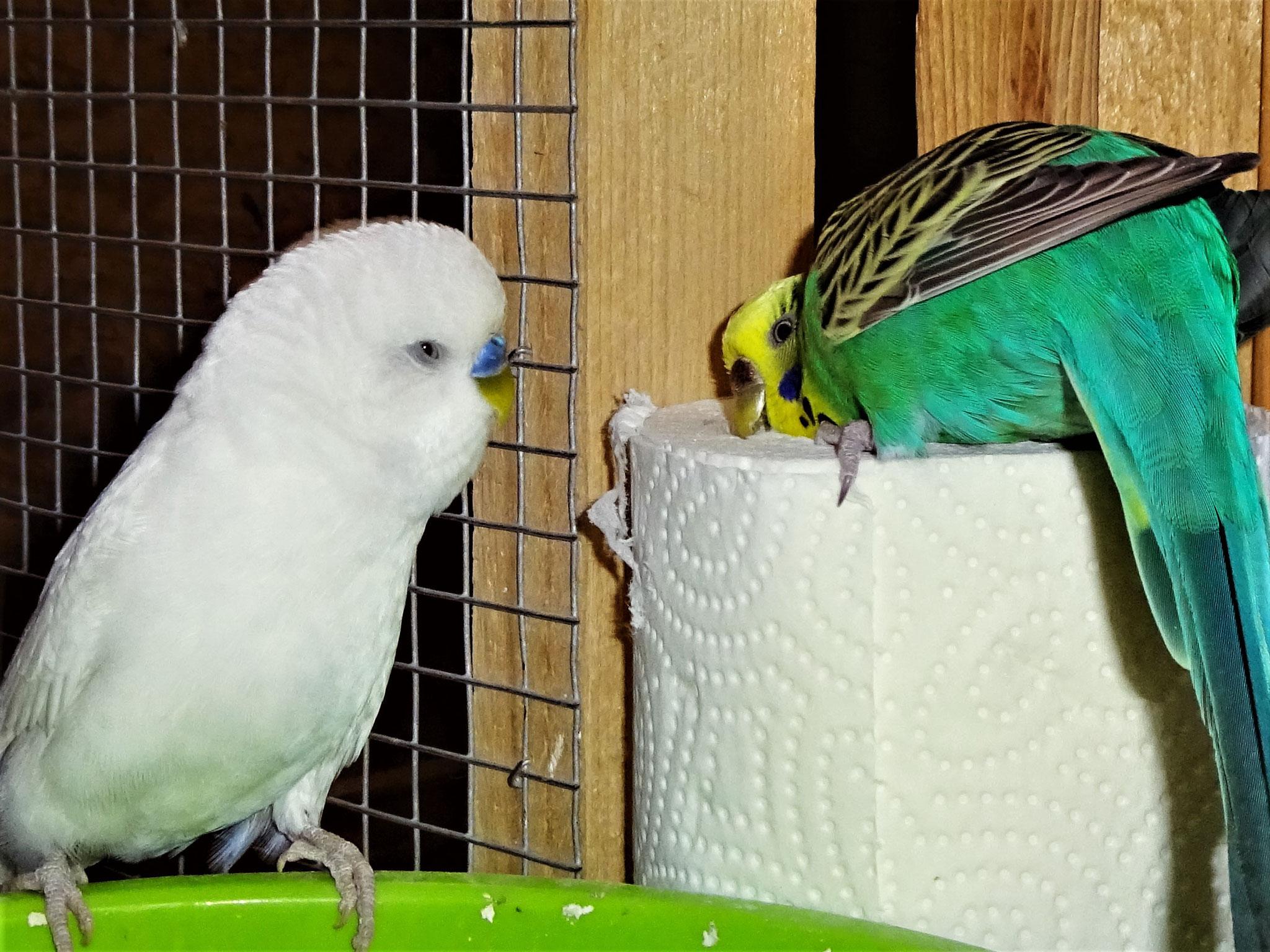 Vergil und Lotte