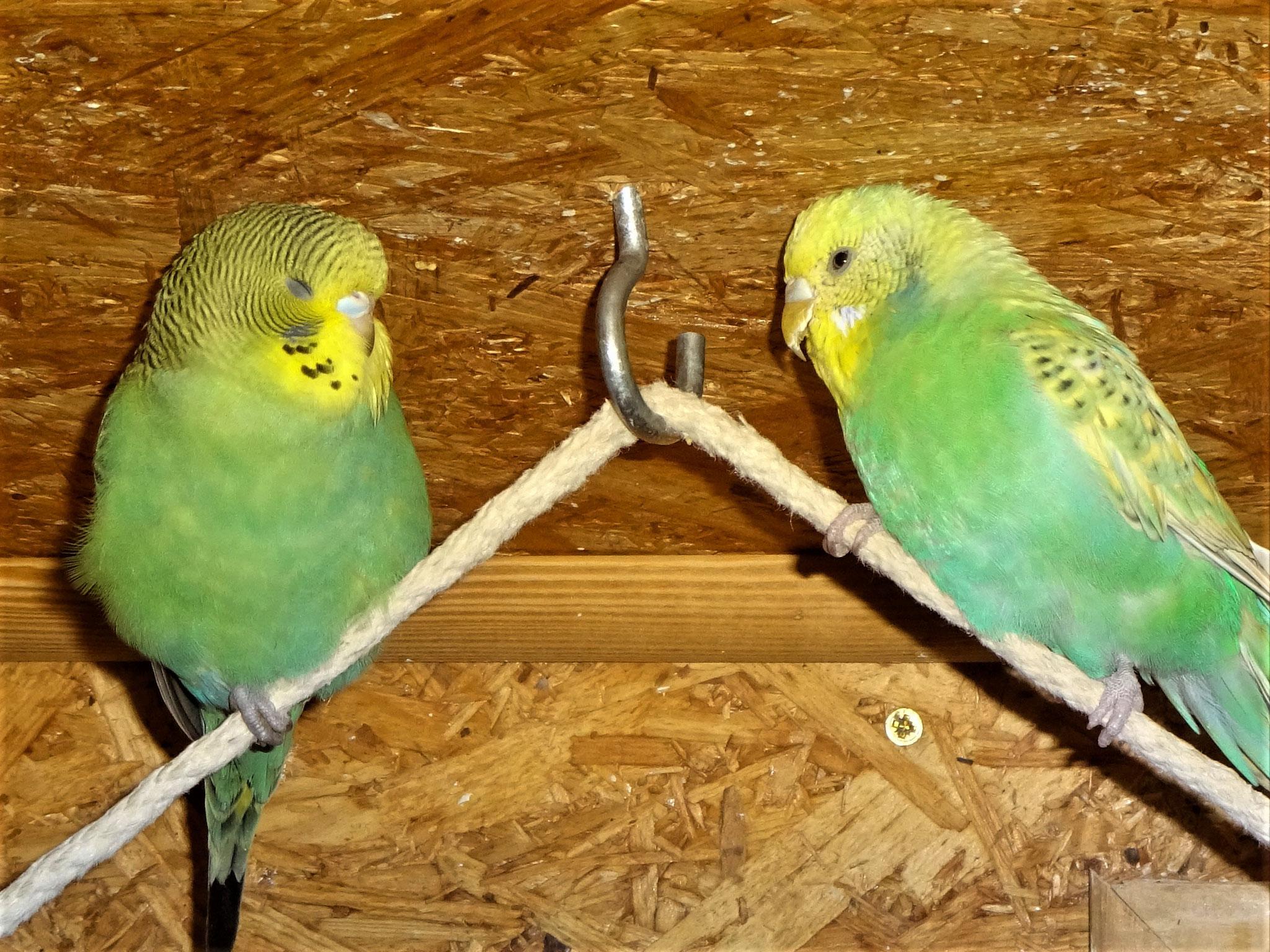 Trixie und Feli mögen sich :-)