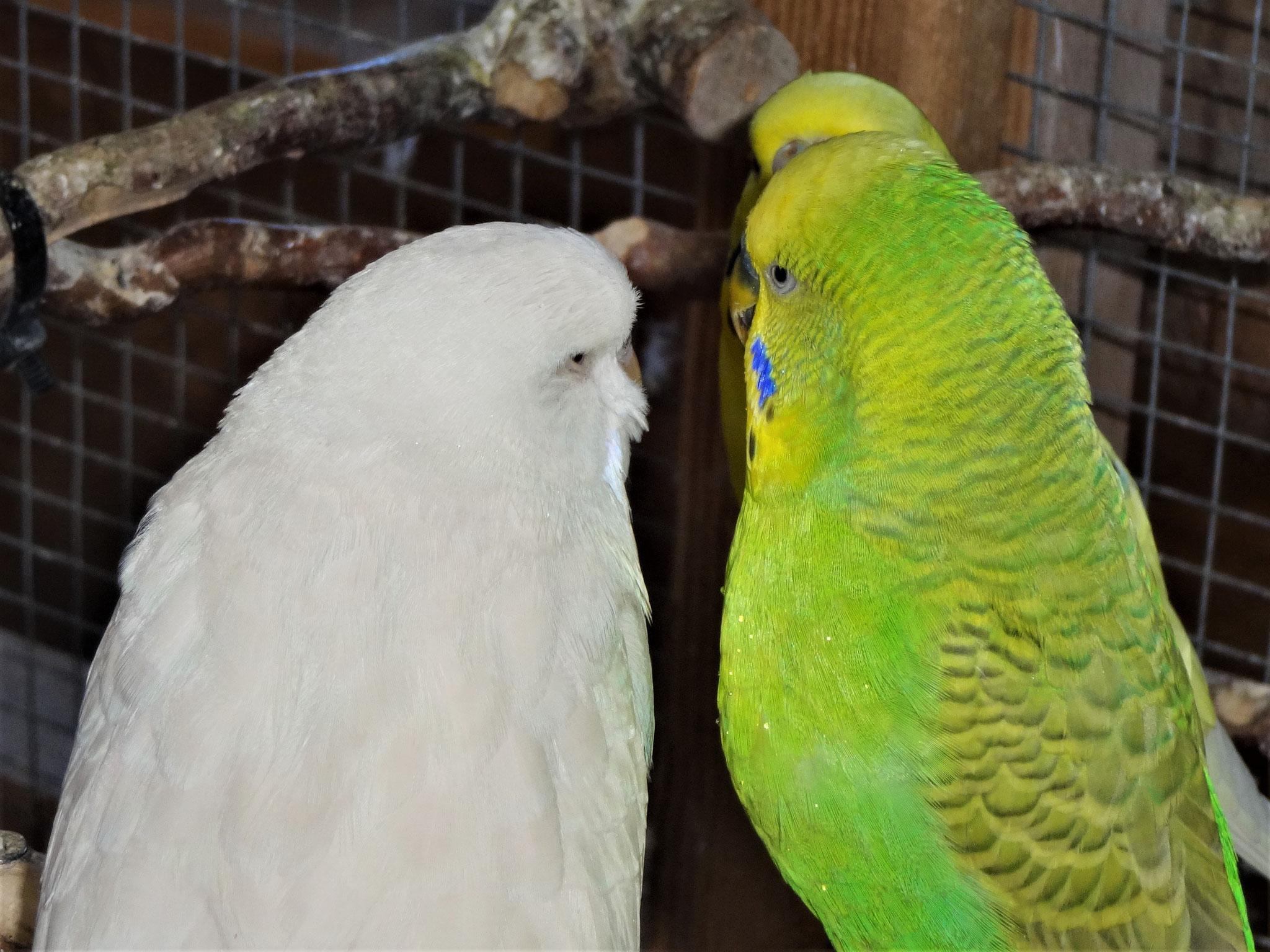 Cleo und Filou...