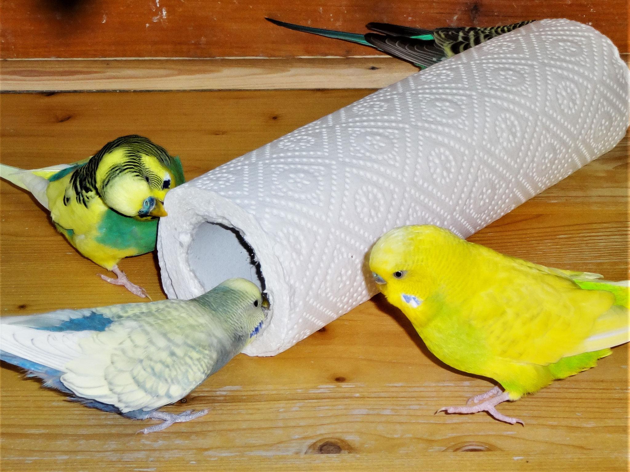 Strolchi, Leroy und Benny
