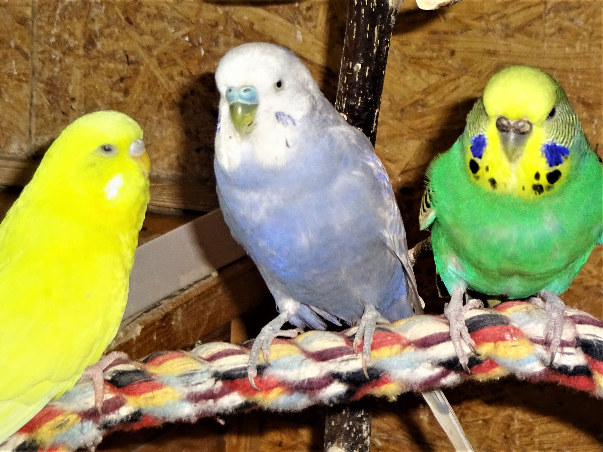 Pepe, Monty und Lotte