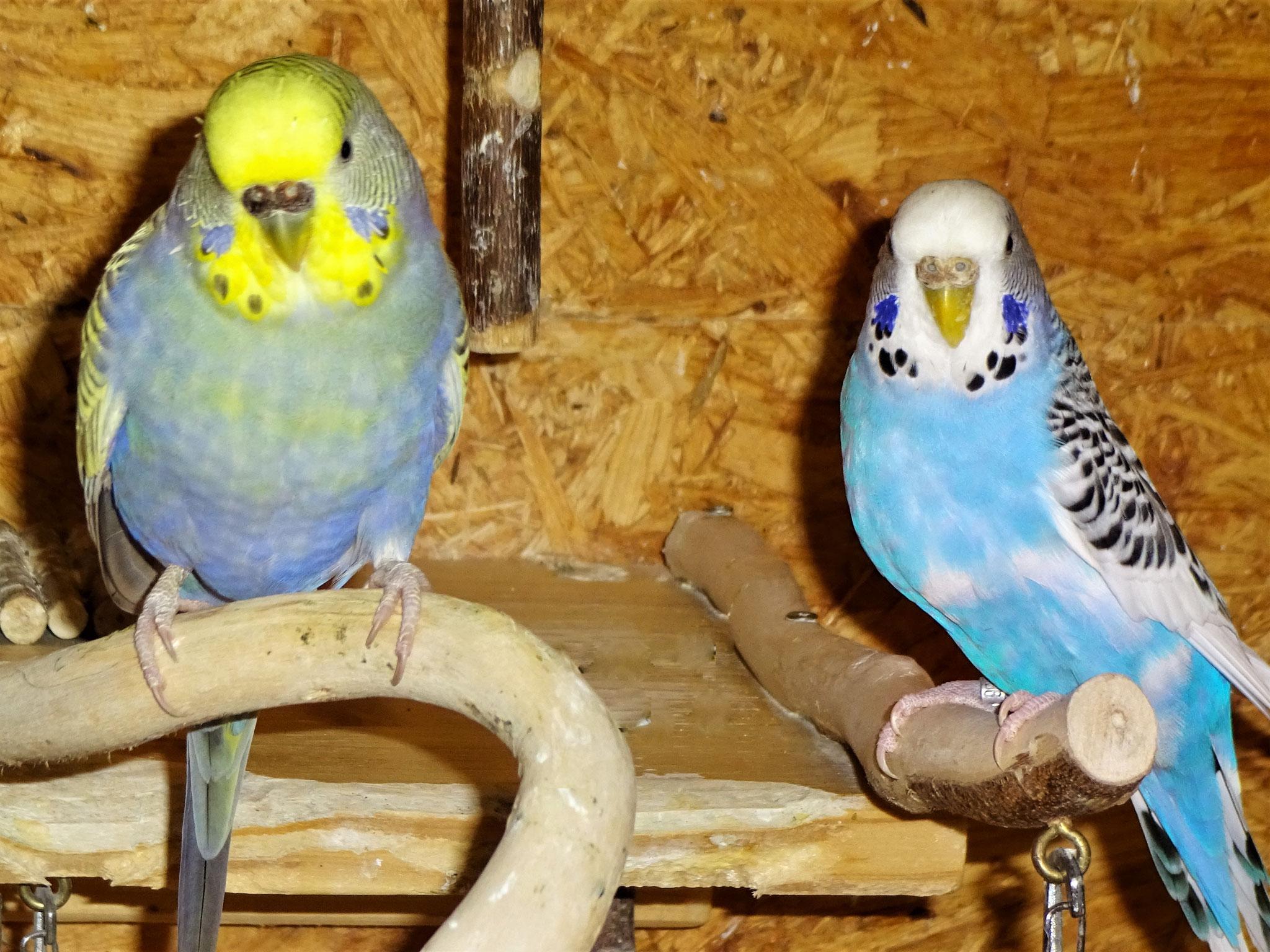 Tini und Joline
