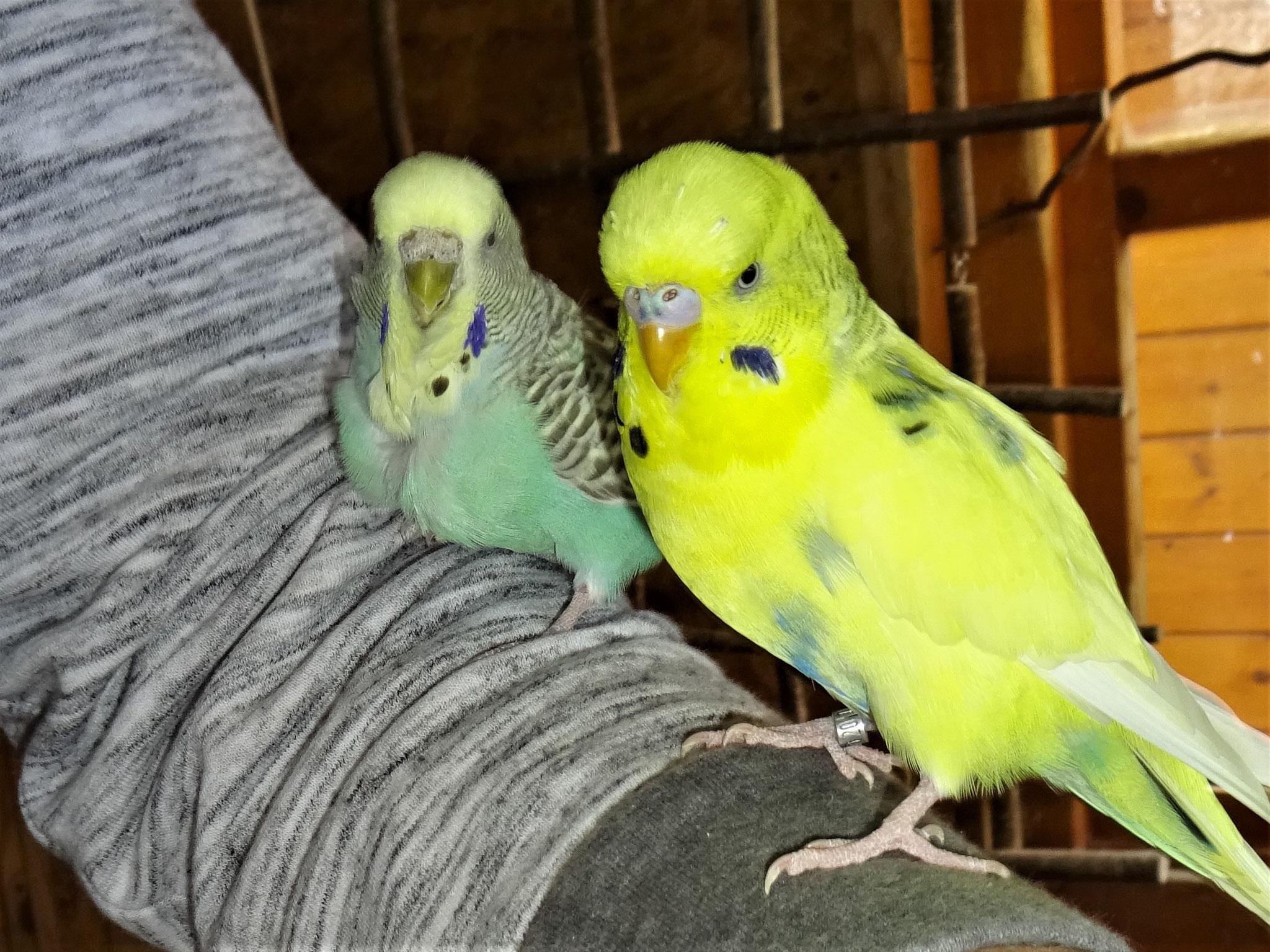 Baby Lana und Tommy