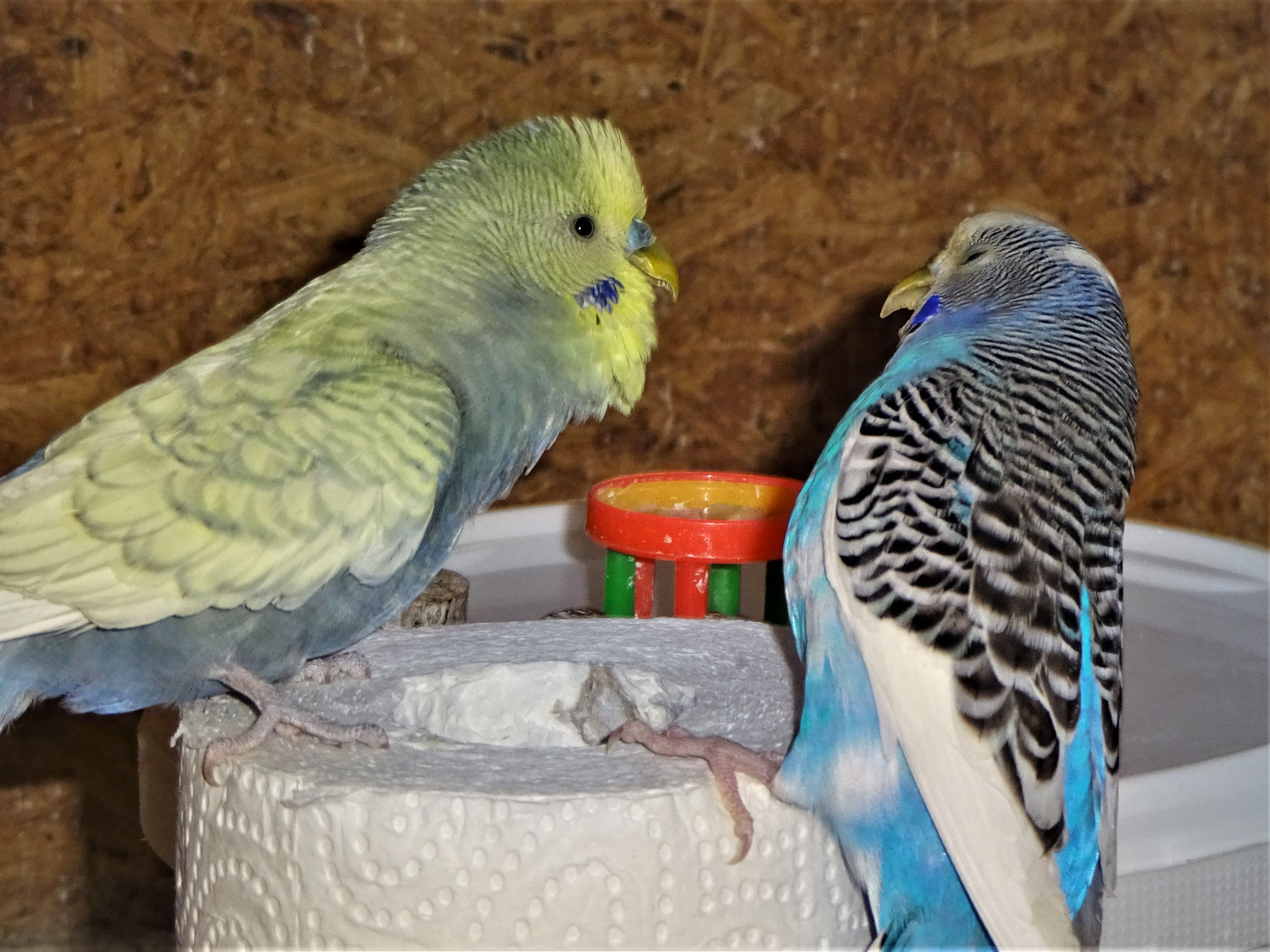 Leroy und Joline