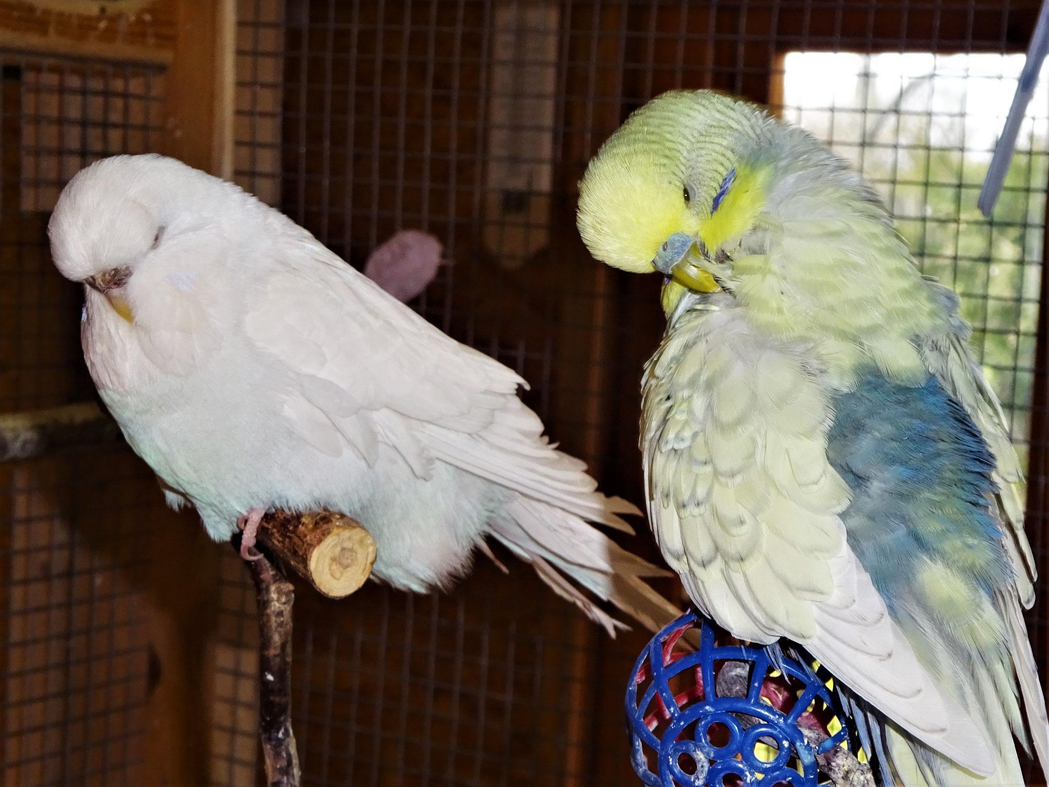 Cleo und Leroy