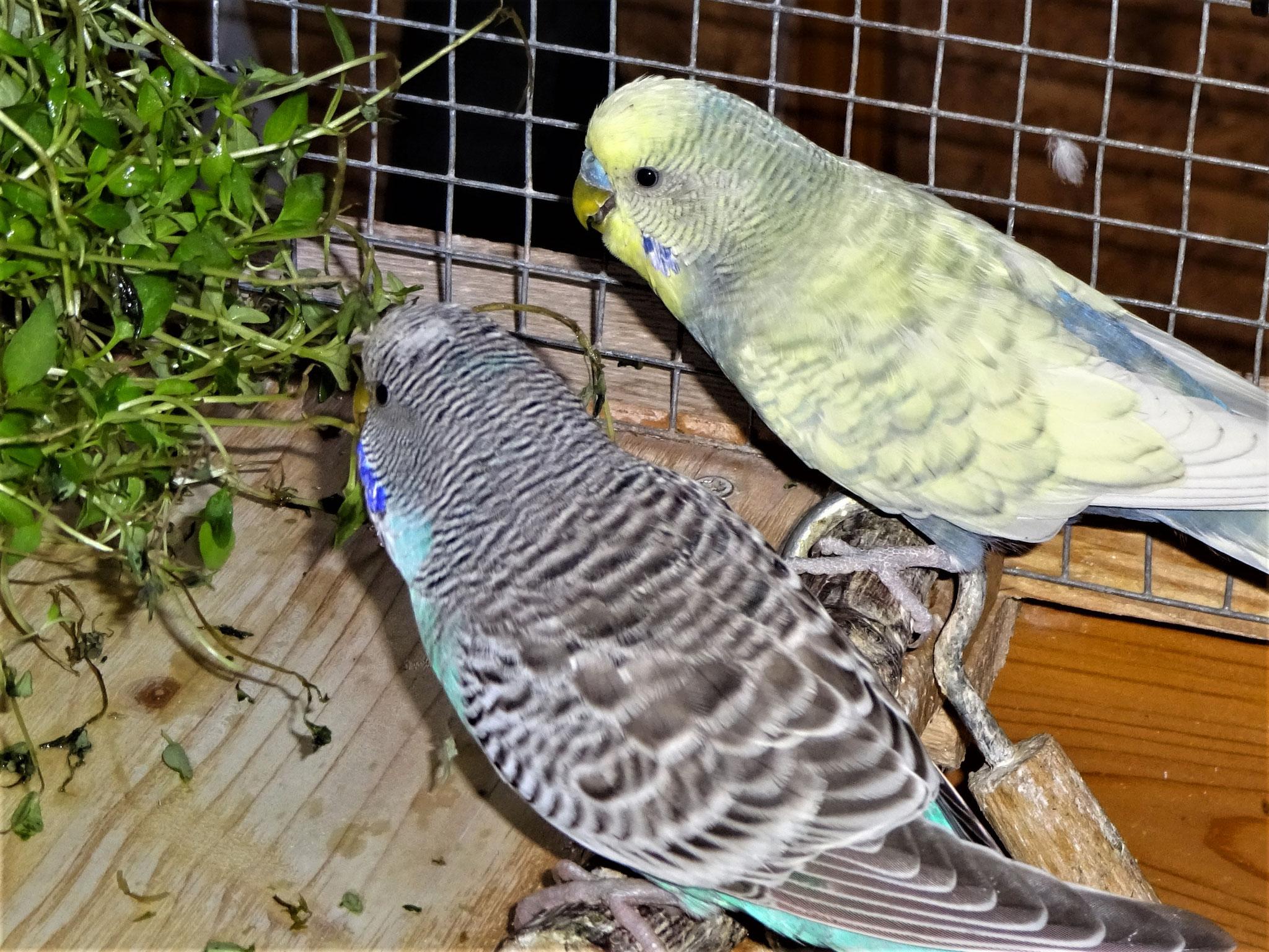 Rudi und Leroy