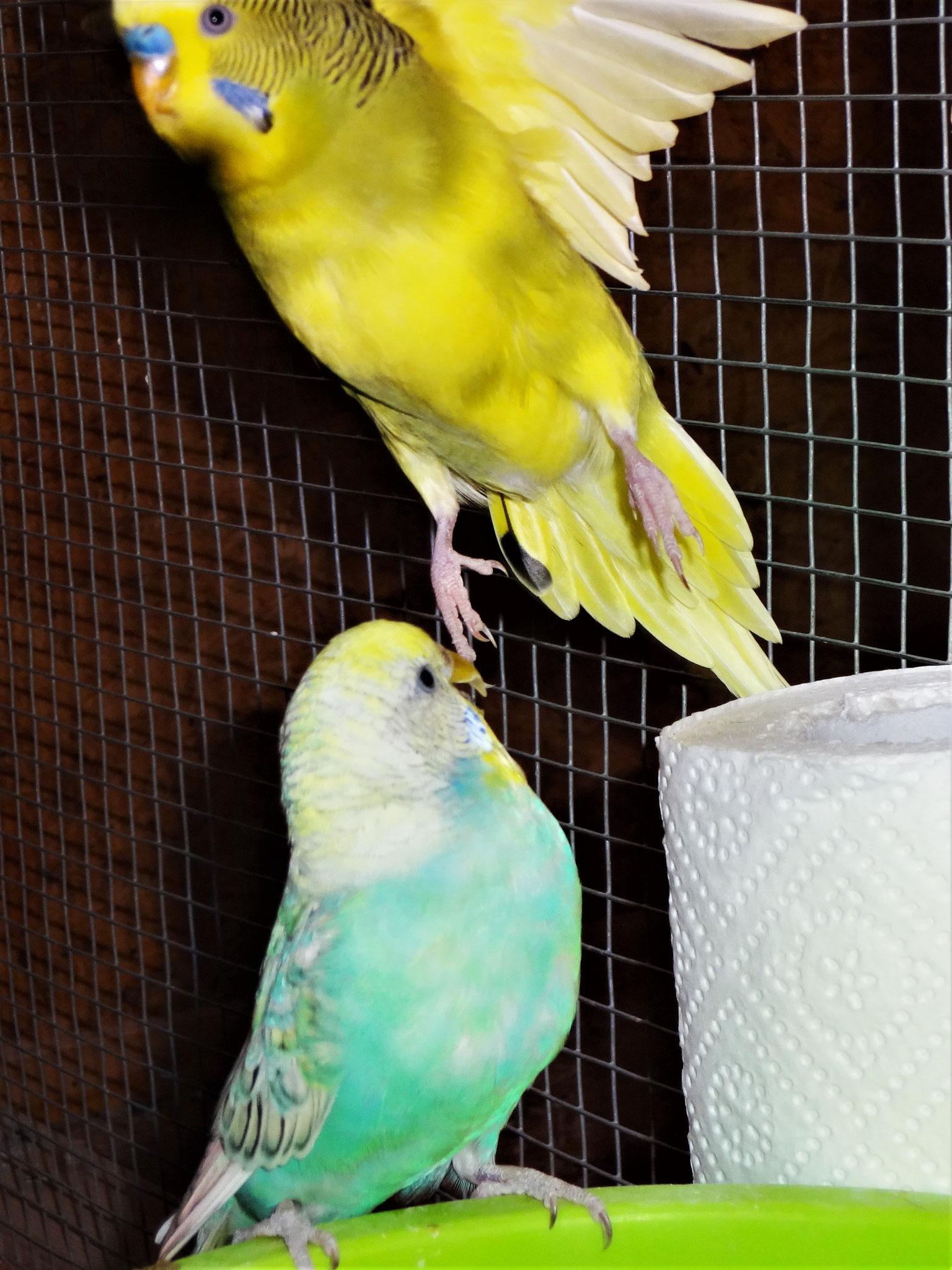 Anni und Oscar hebt ab...  ;-)