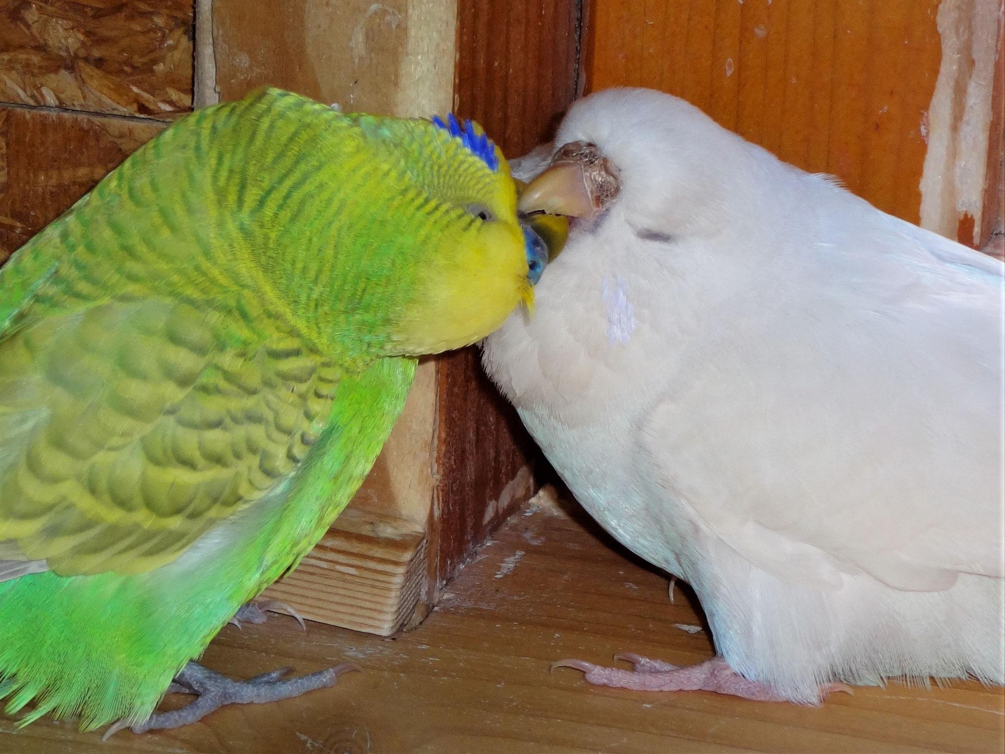 Filou und Cleo