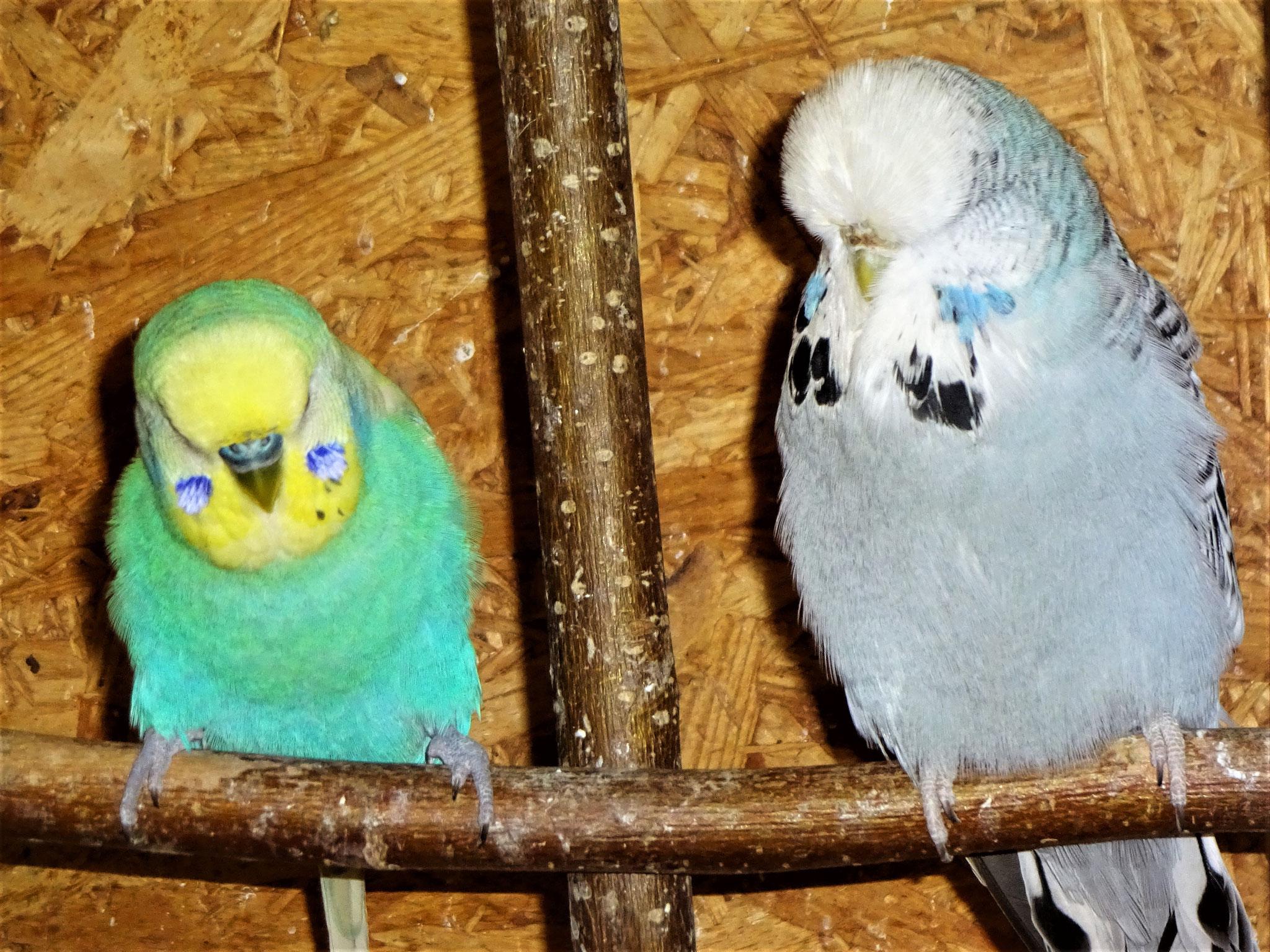 Flo und Queeny