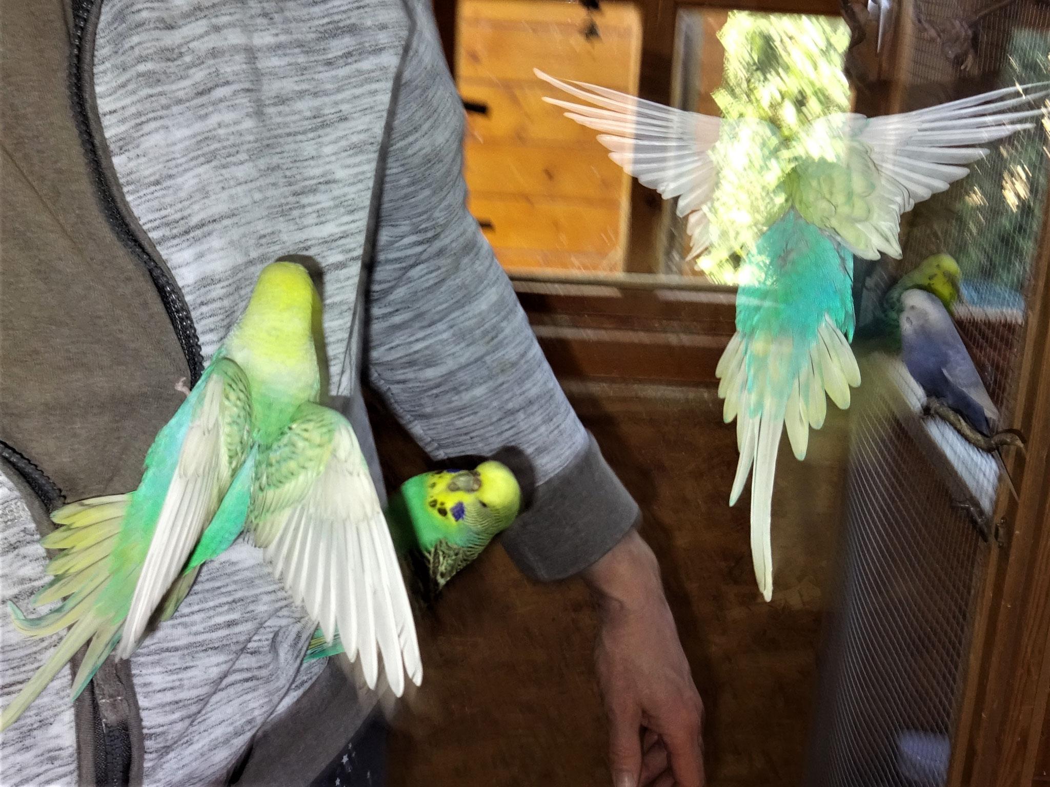 Anni, Lotte und Flo fliegt...
