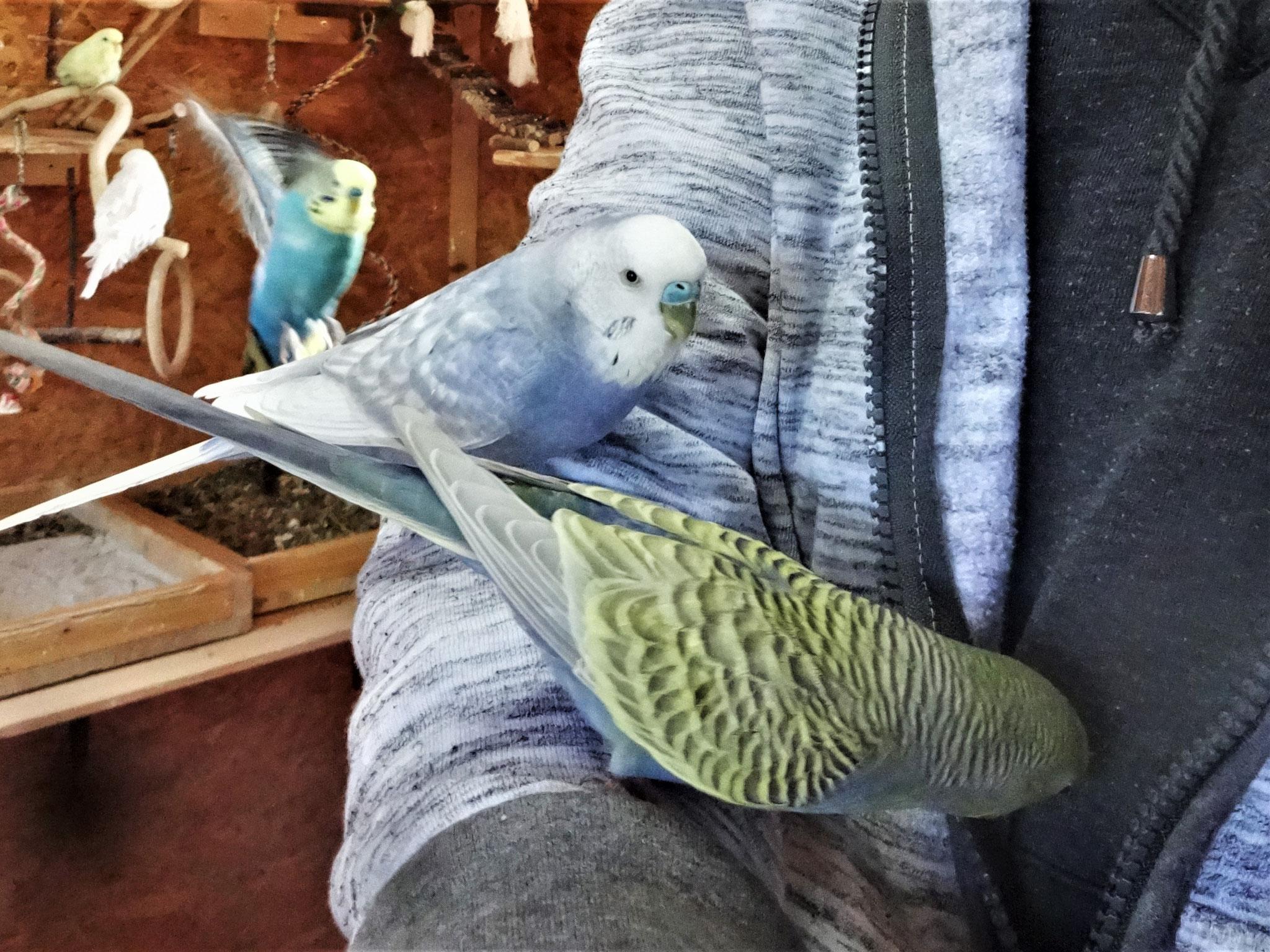 Monty und Tini