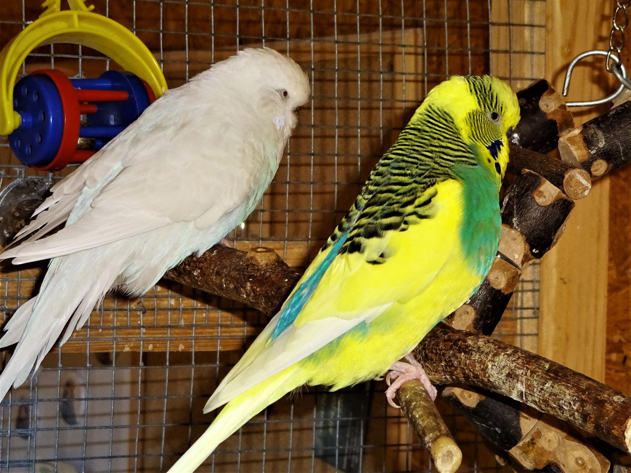 Cleo und Strolchi