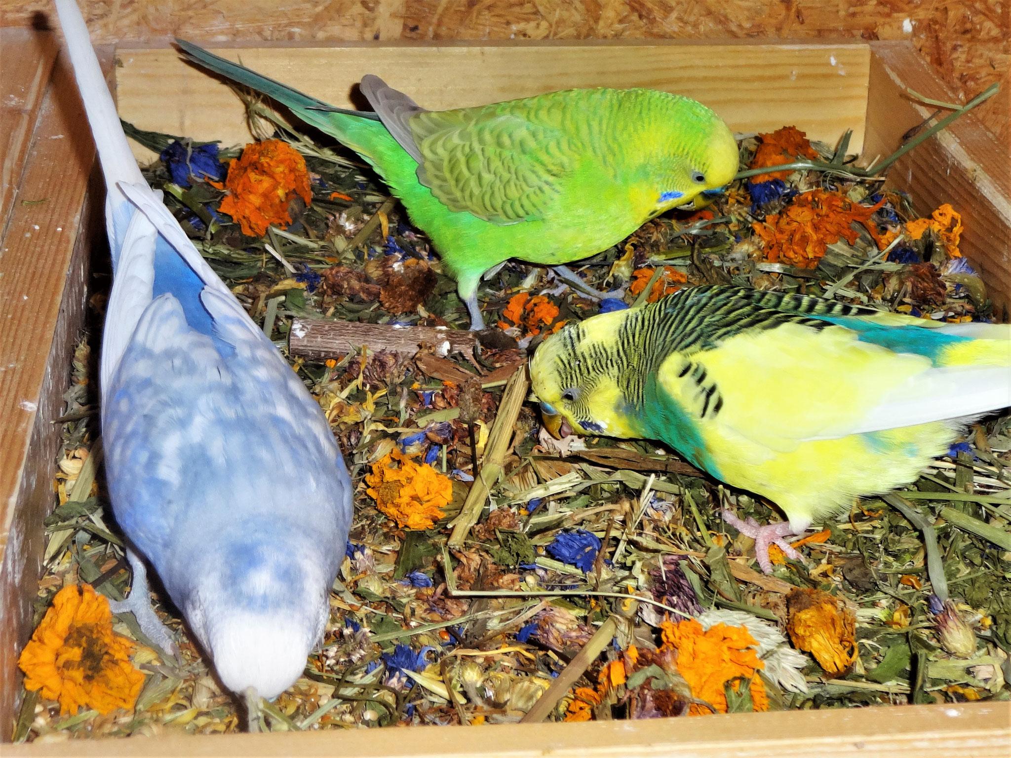 Monty, Filou und Strolchi