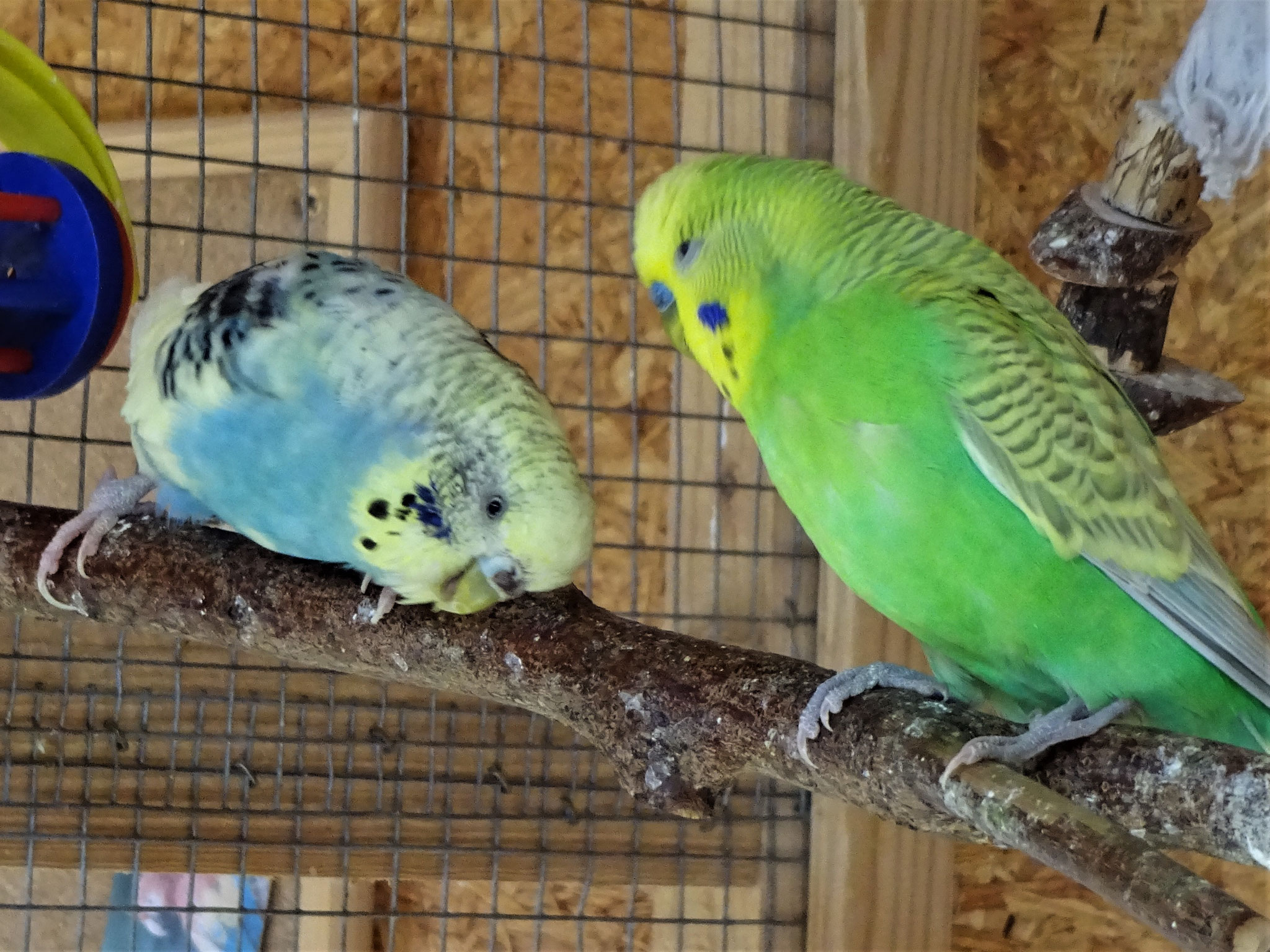 Tiffi und Filou