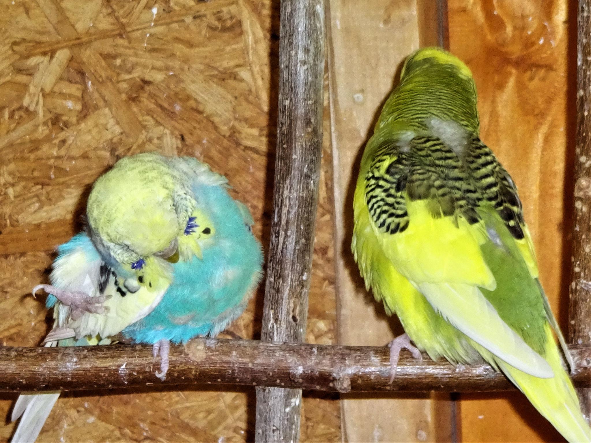 Tiffi und Oscar