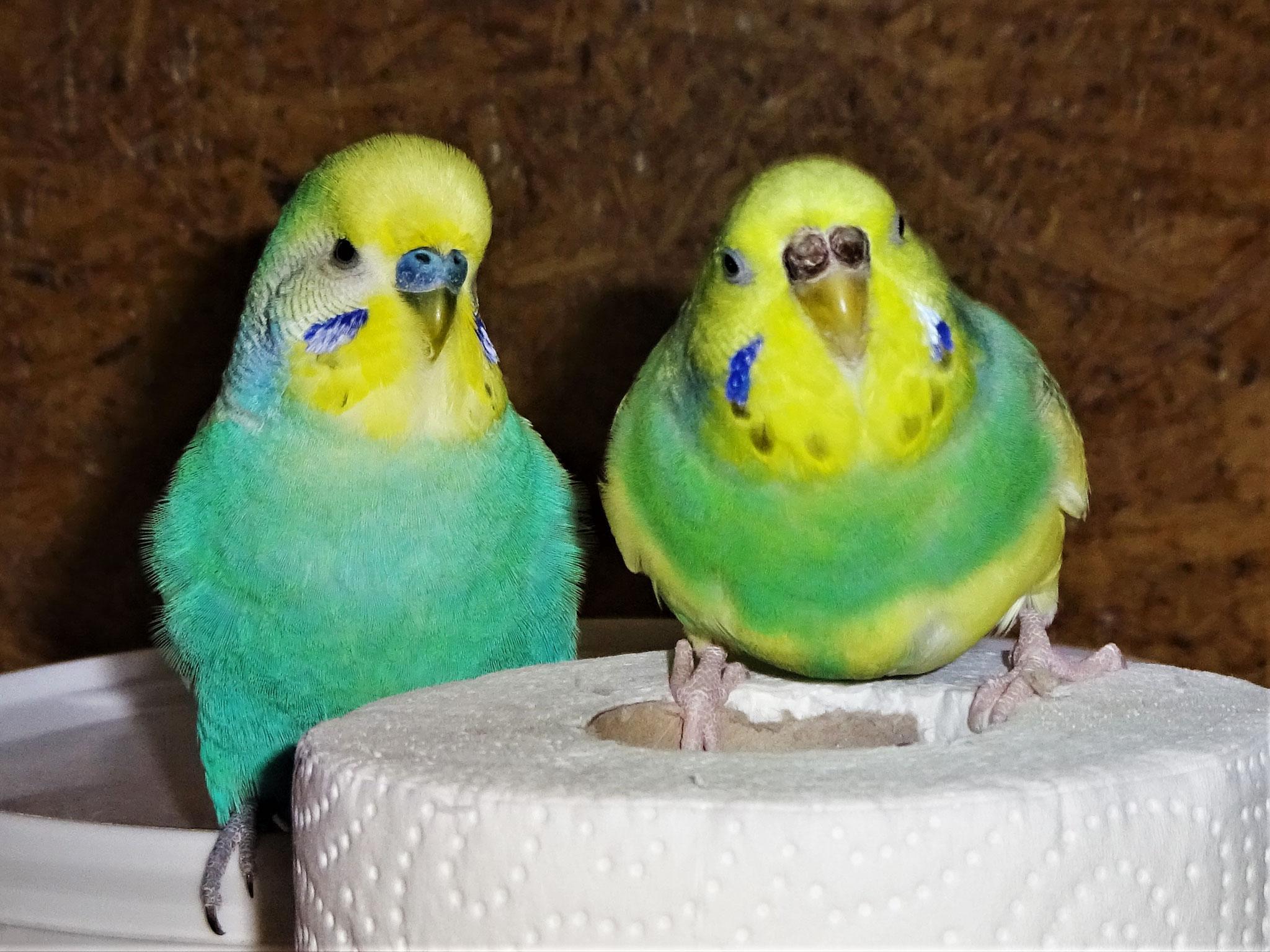 Flo und Miss Patty