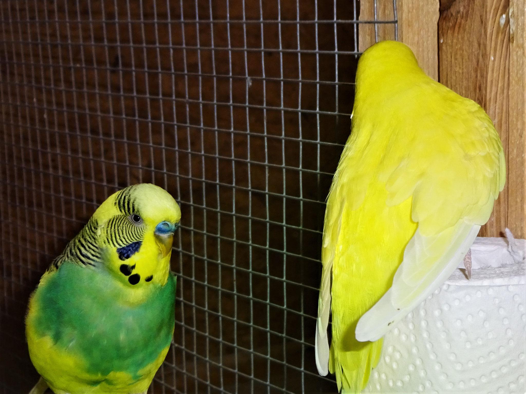 Strolchi und Pepe