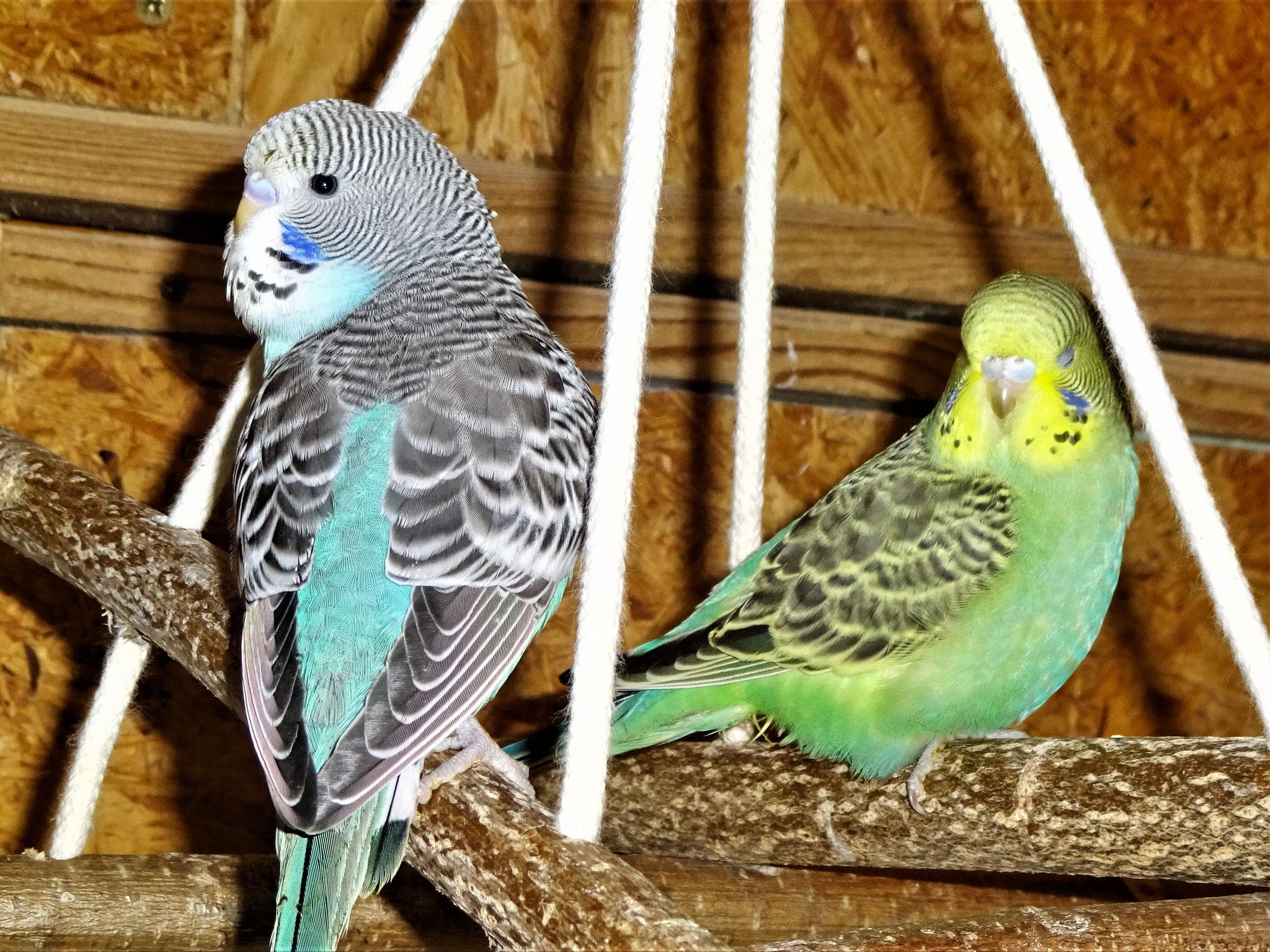 der Blaue und Trixie