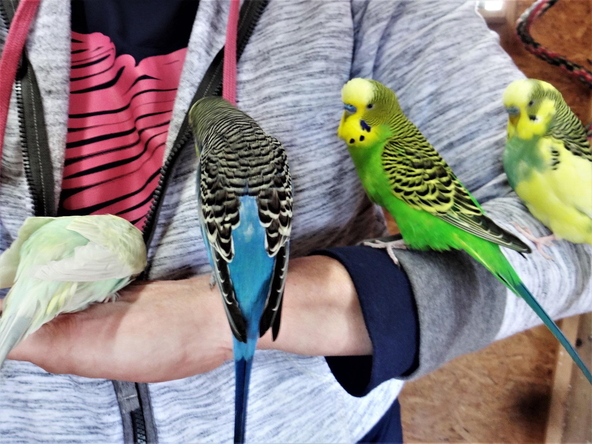 ;-)   ...sind sie nicht brav...  Flocke, Jordy, Flip und Strolchi