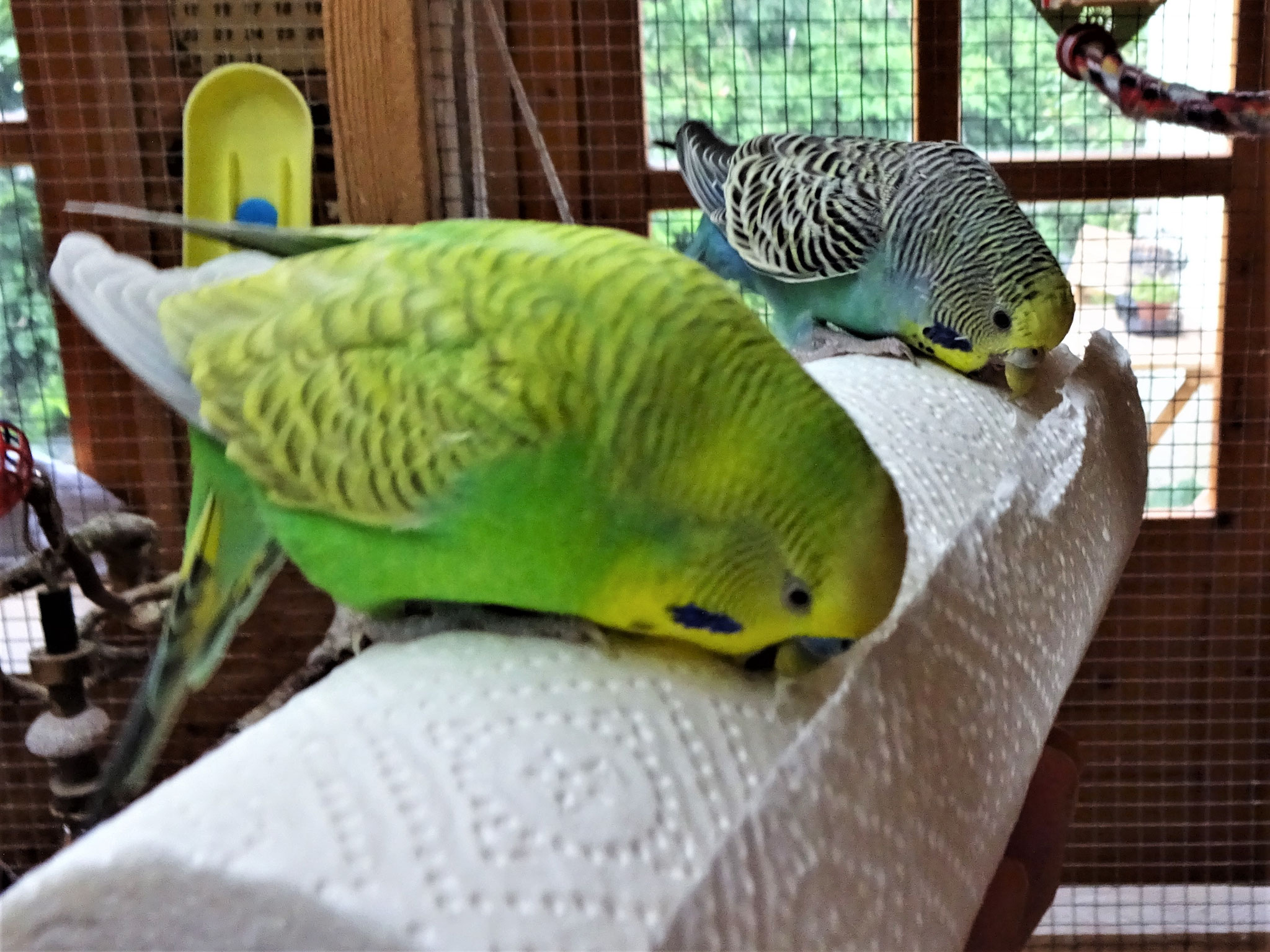 Filou und Lotte