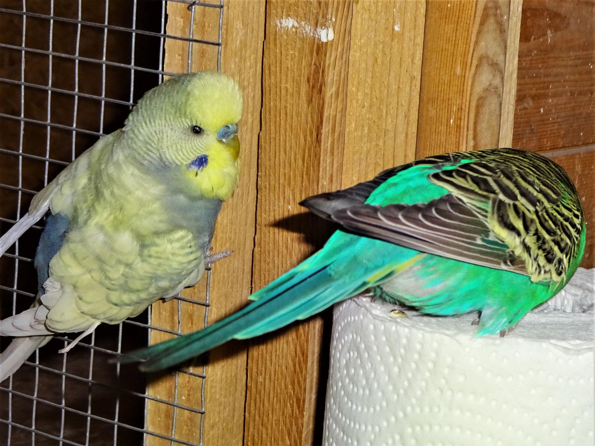Leroy und Lotte