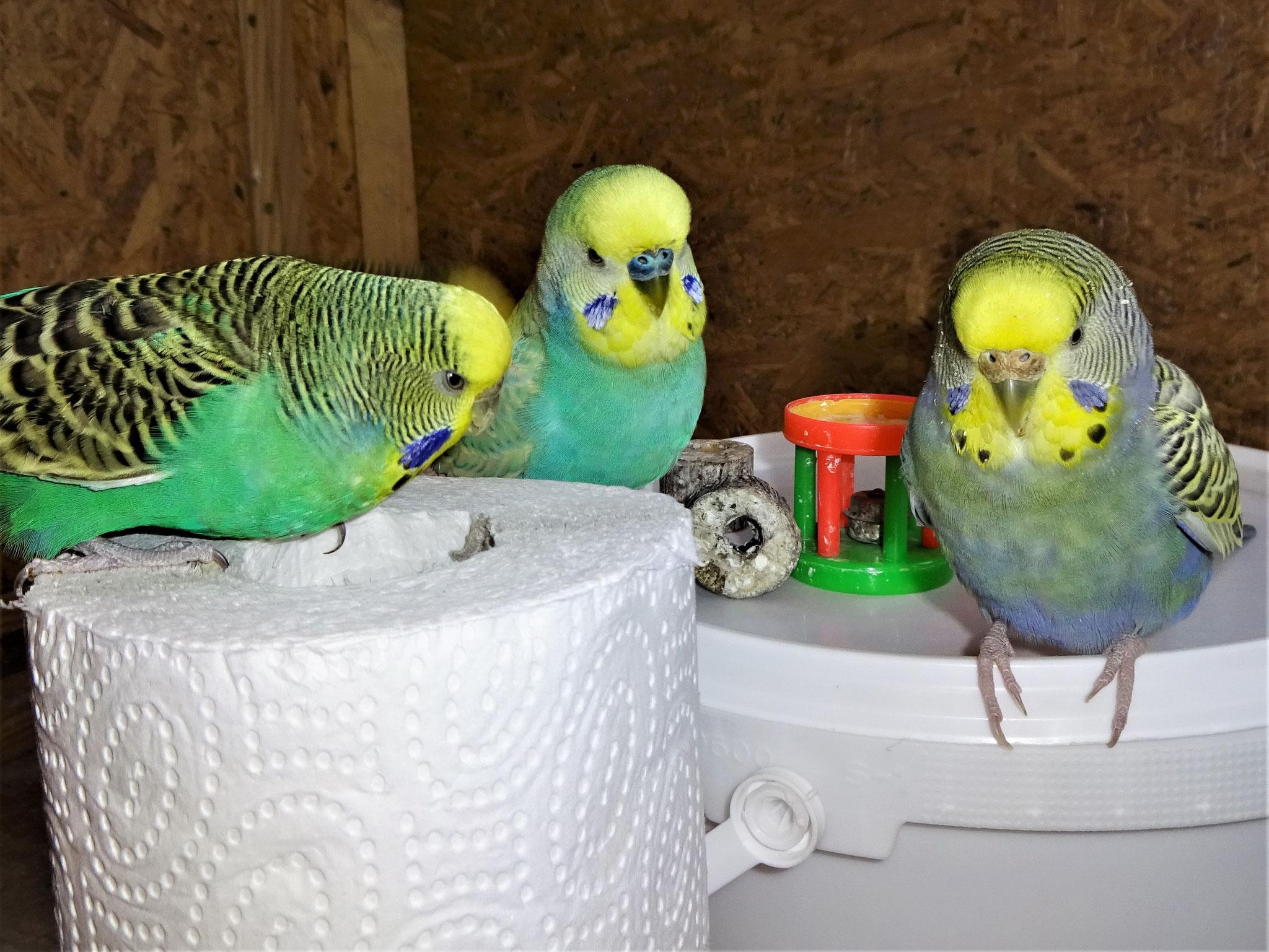 Lotte, Flo und Tini