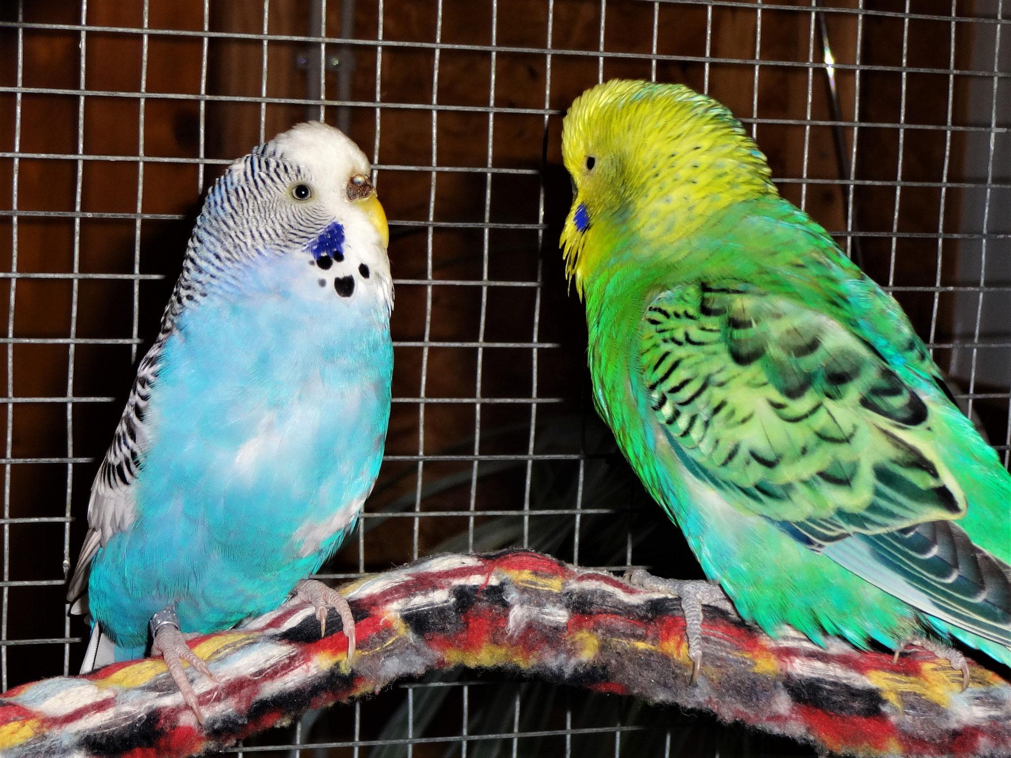 Joline und Smarty in love