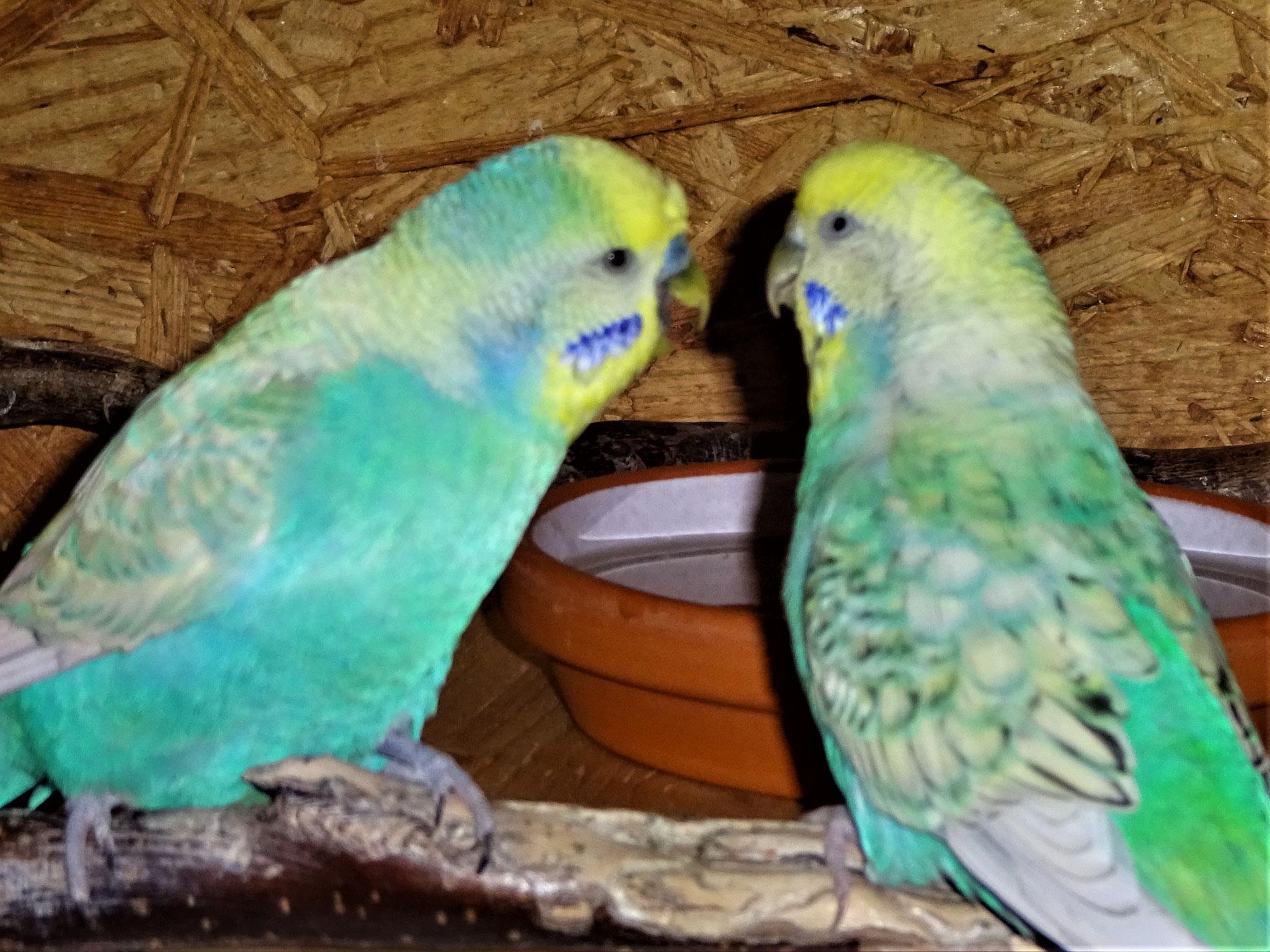 Flo und Anni