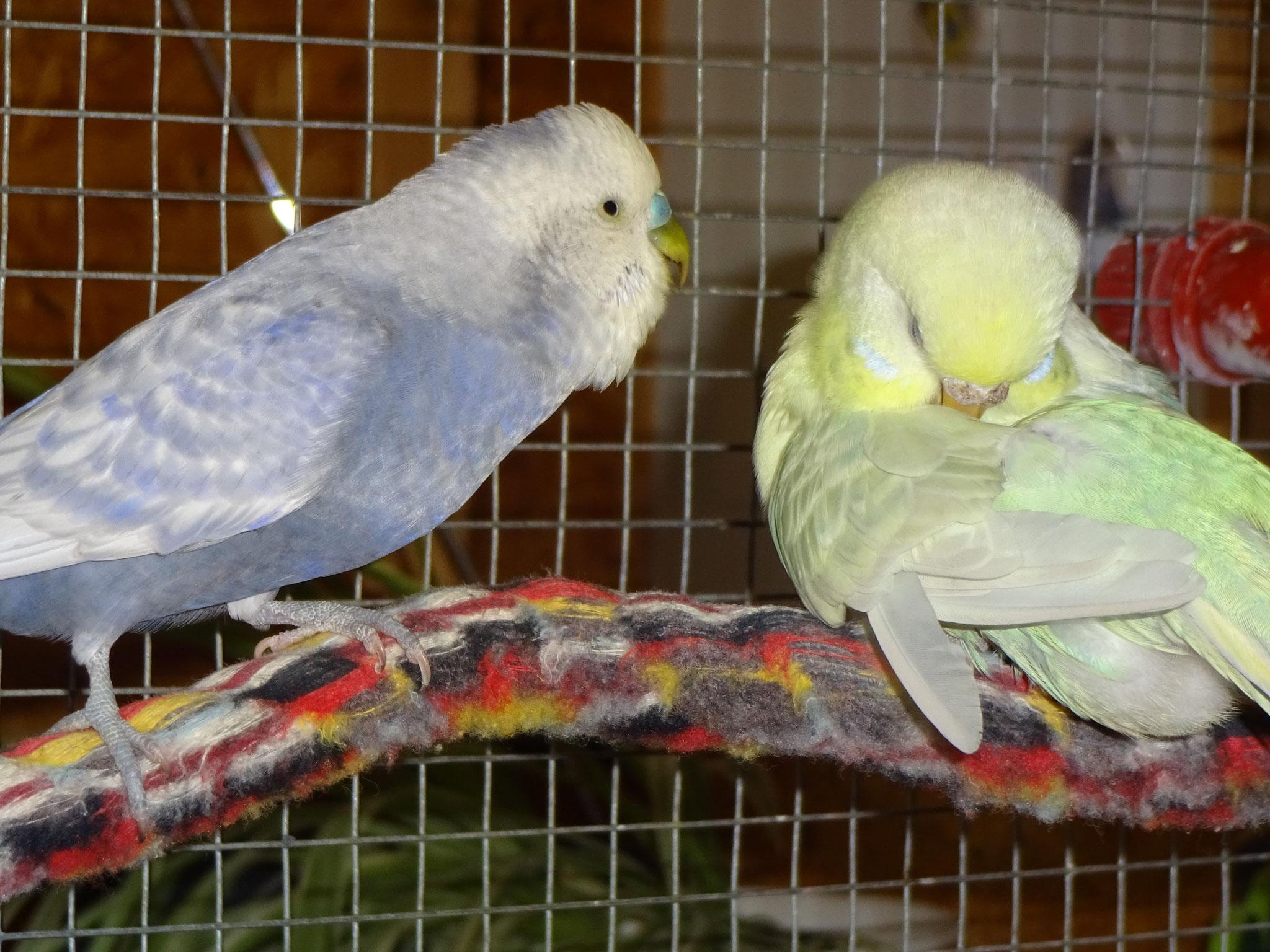Monty und Flocke
