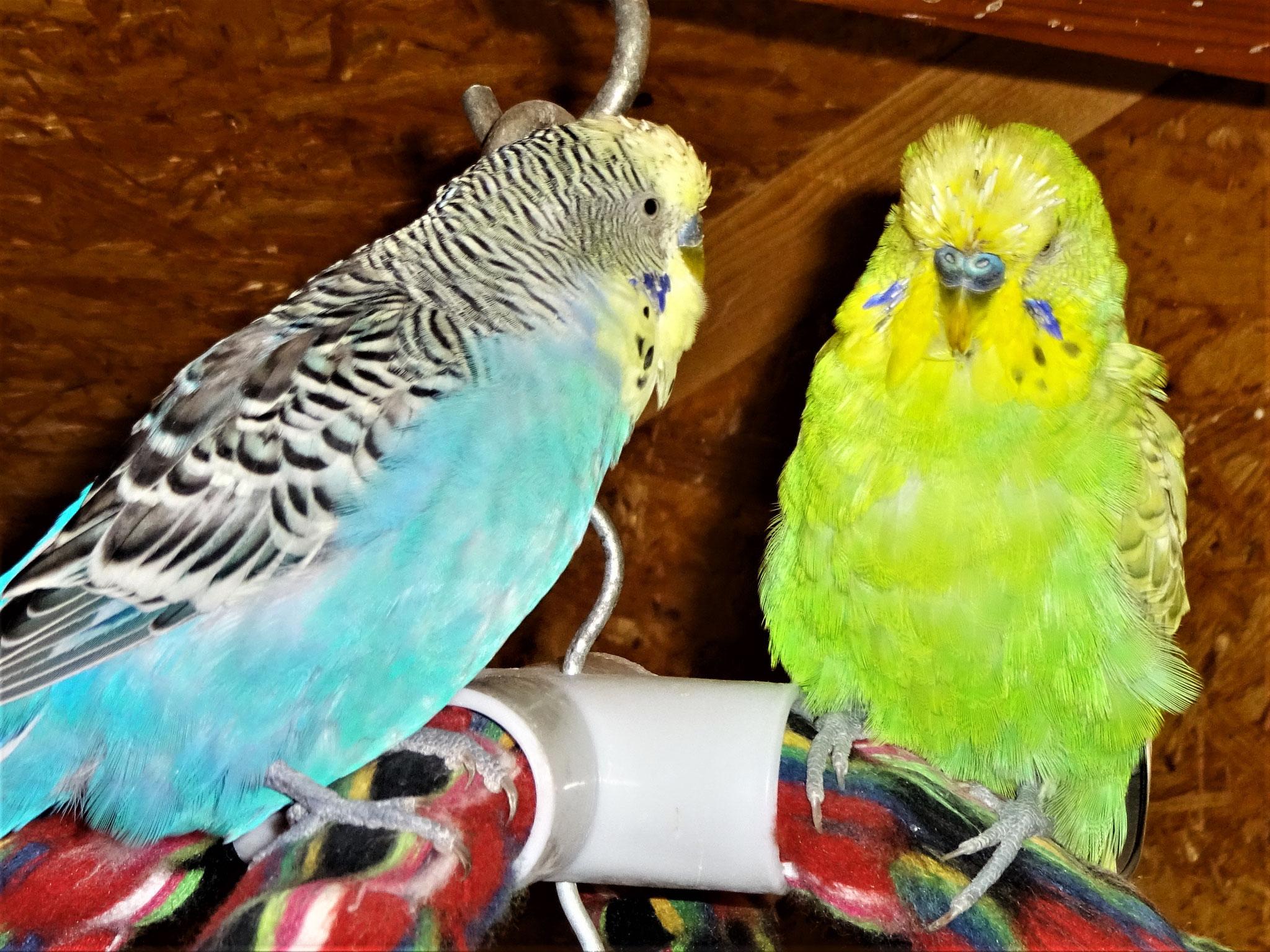 Jordy und Filou