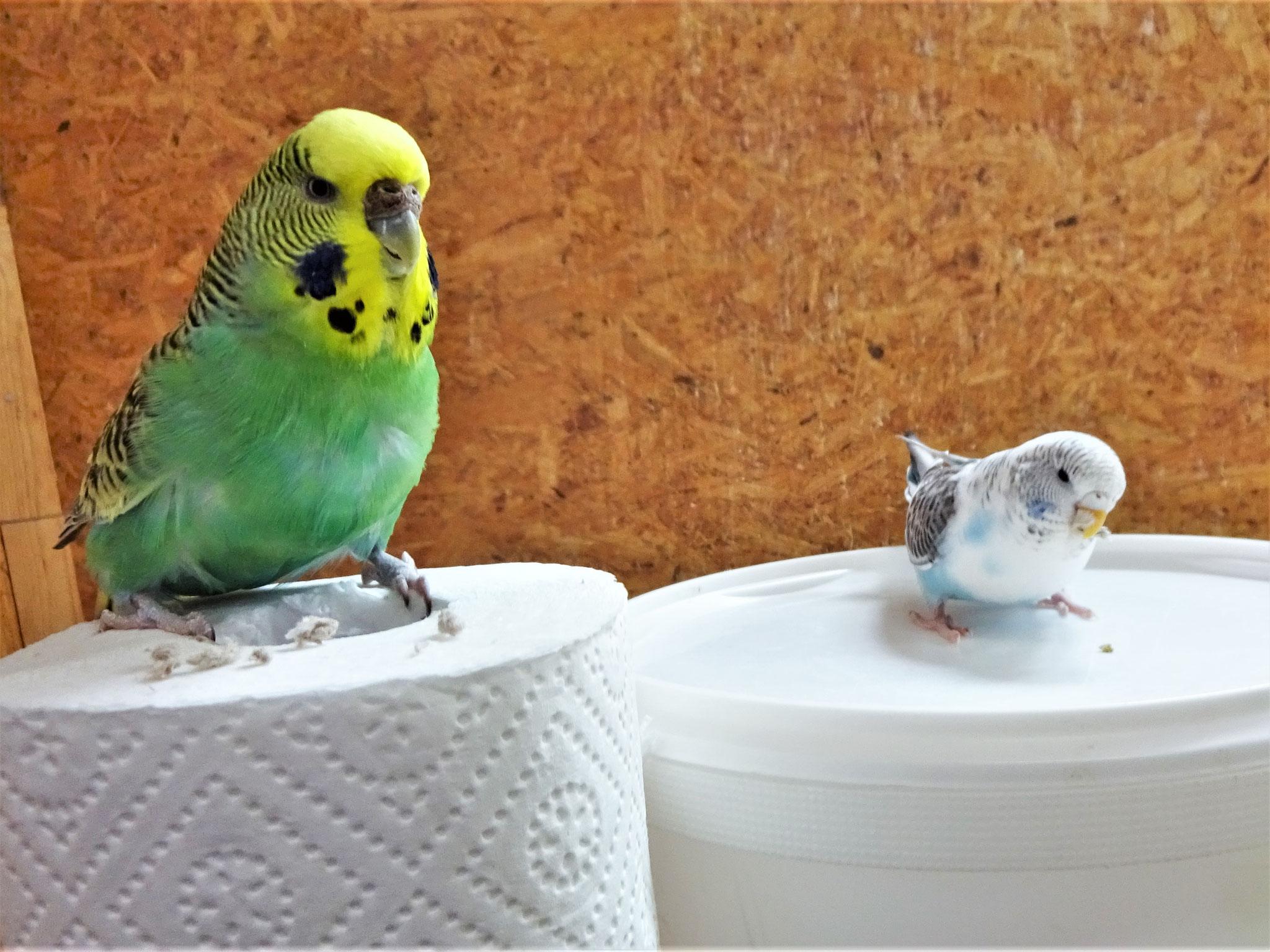 ...ups, was ist das denn für ein kleines Vögelchen?