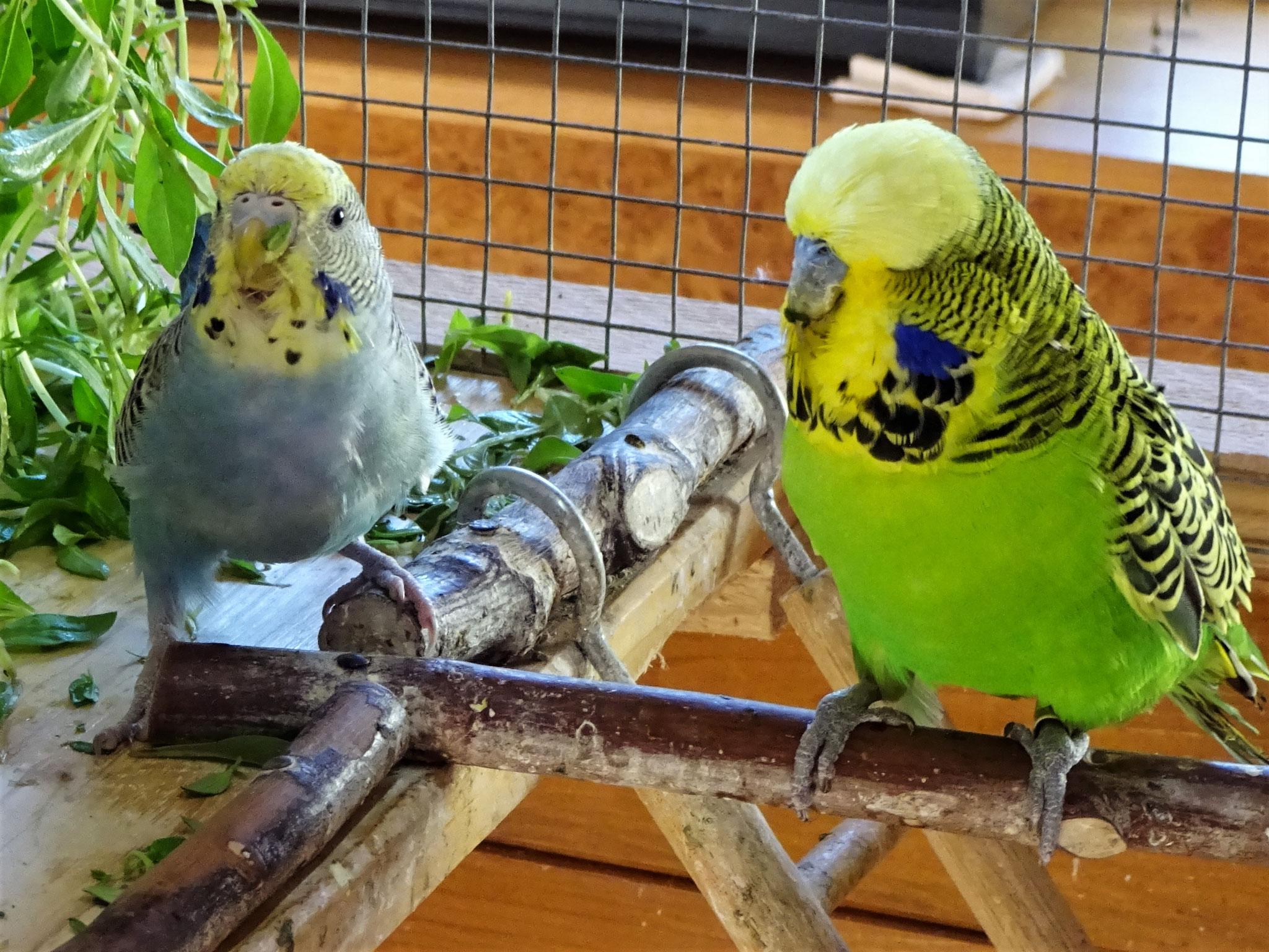 Lotte und Bosse