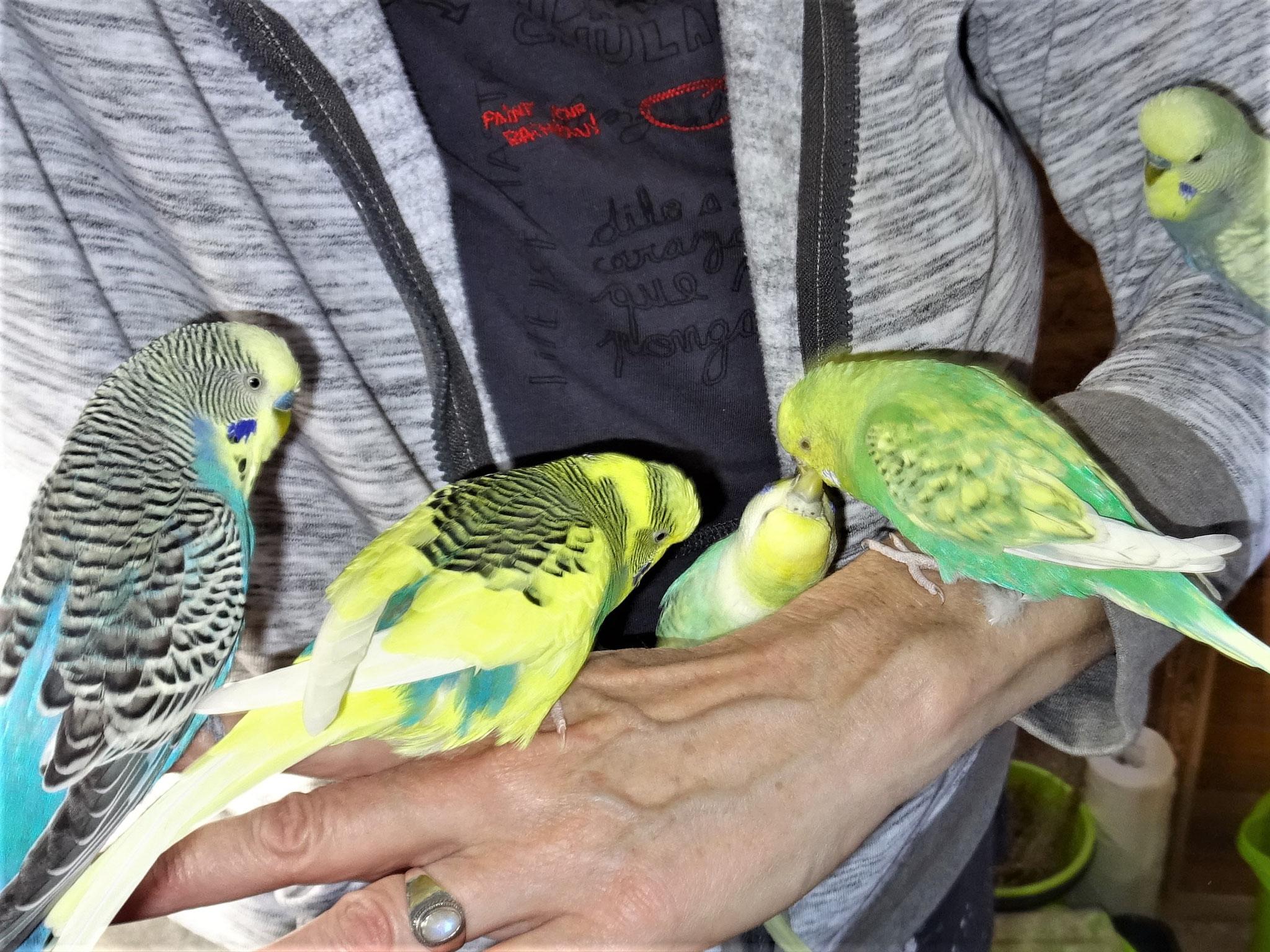 Jordy, Strolchi, Anni, Feli und Leroy