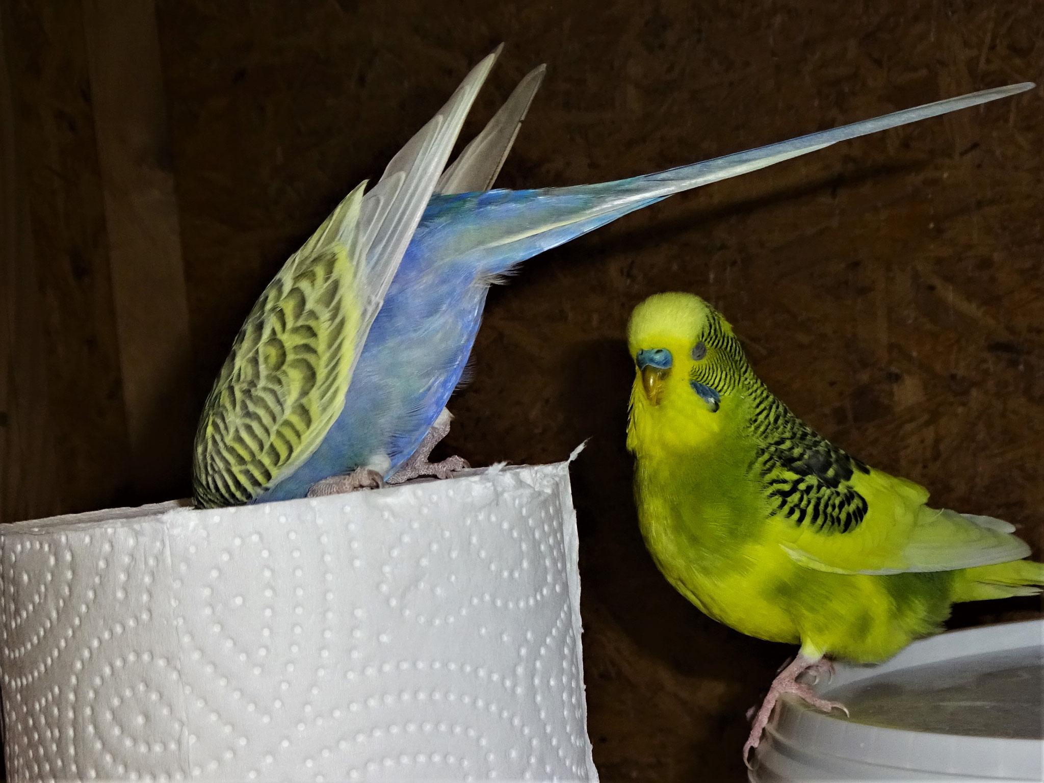 Tini und Oscar