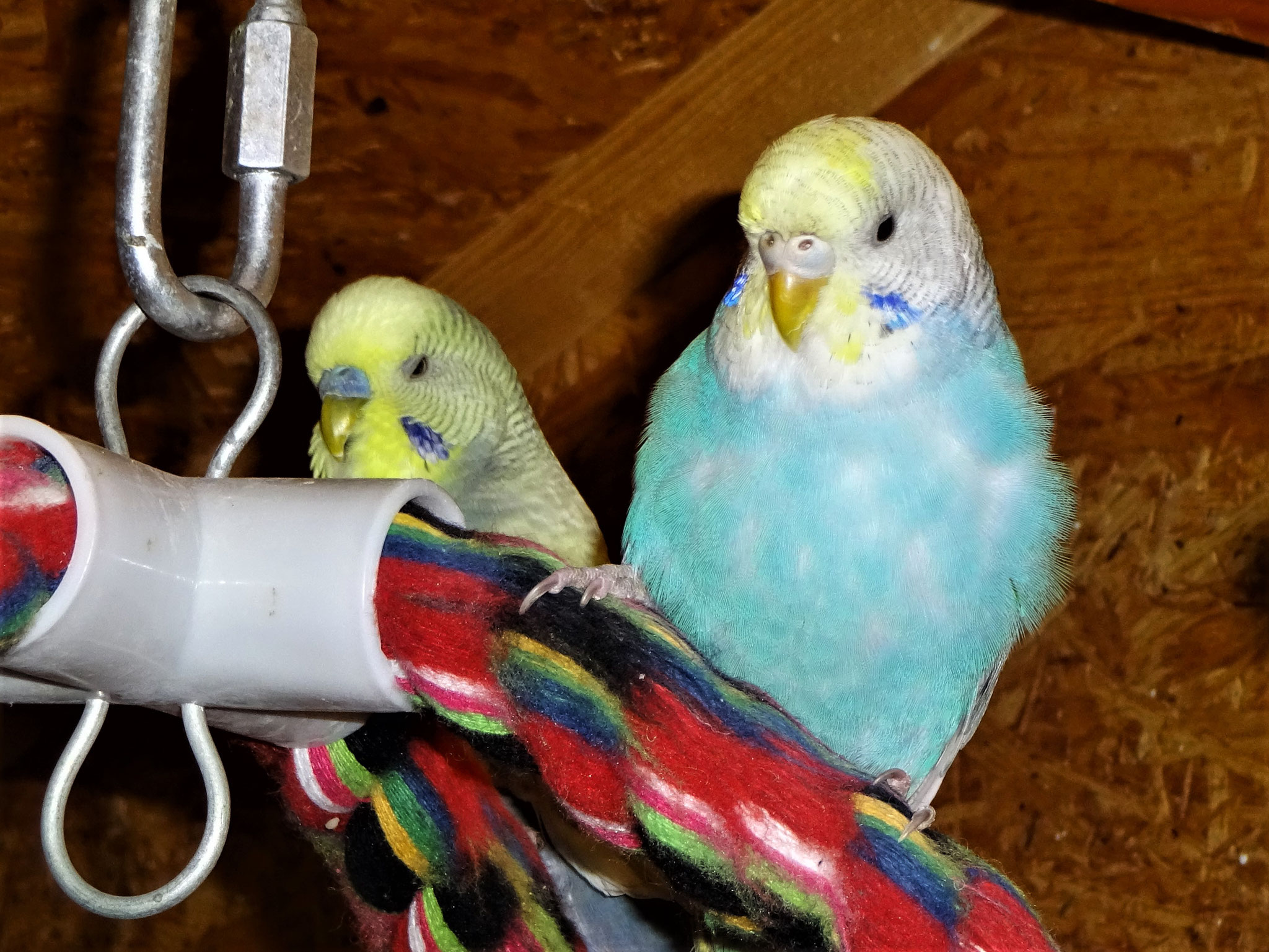 """Anni: """"...ich geh mal lieber zu Leroy, der scheint ganz lieb zu sein..."""""""