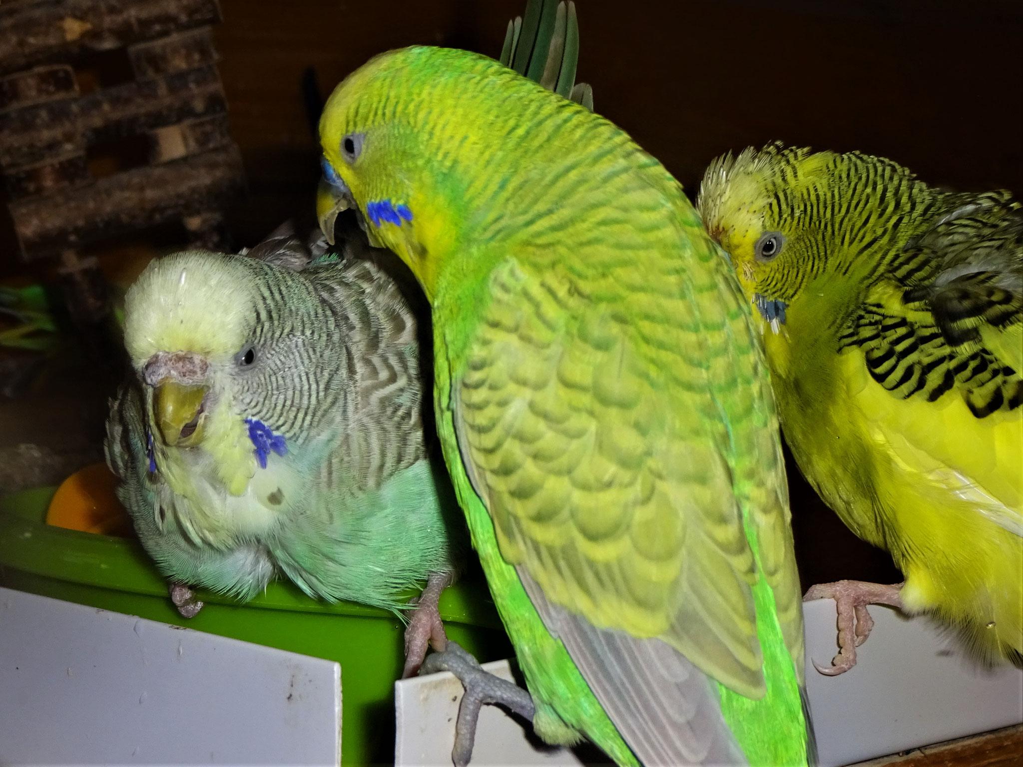 ...Filou und Oscar möchten auch so gerne baden...,