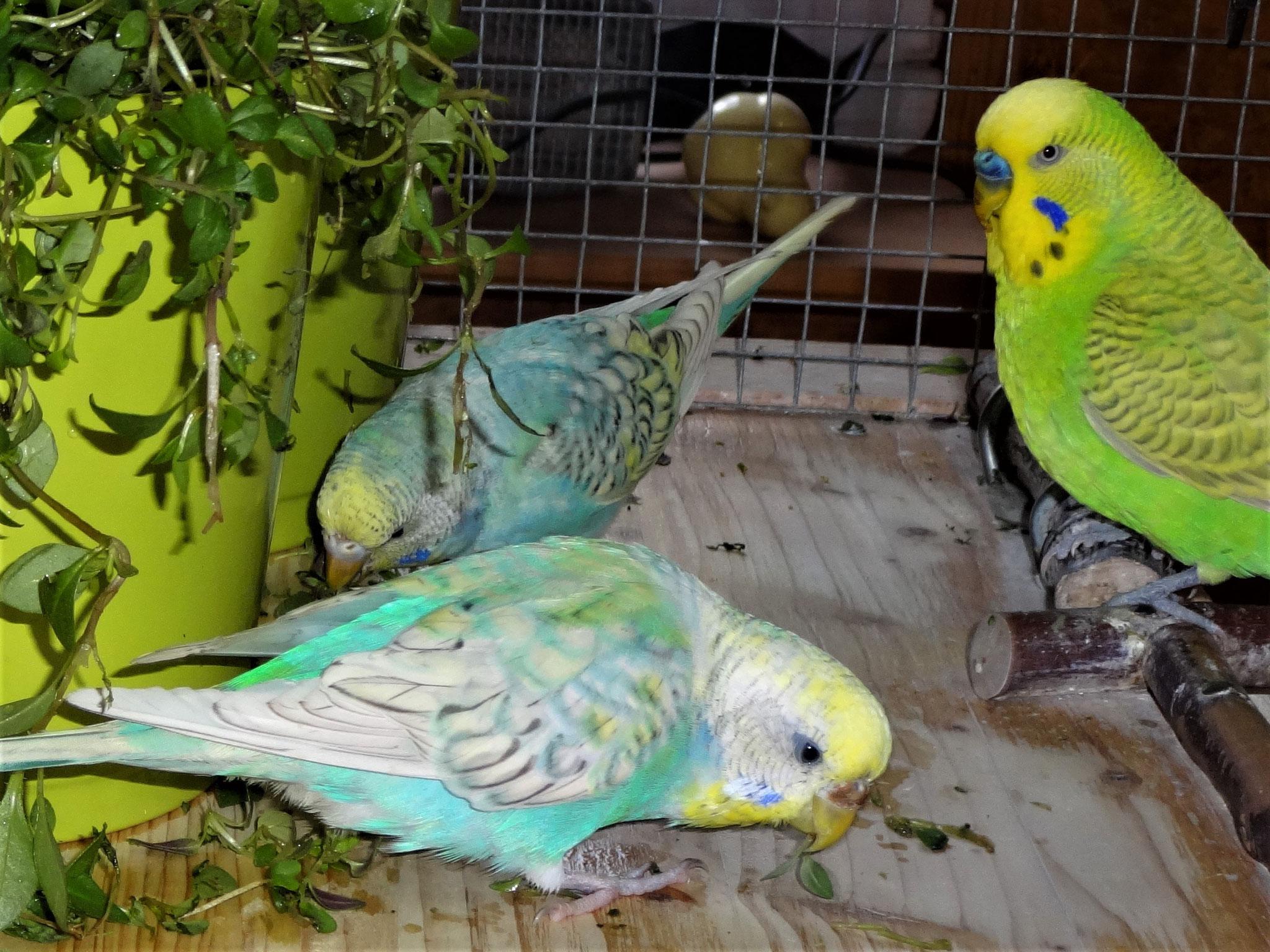 Anni, Felix und Filou