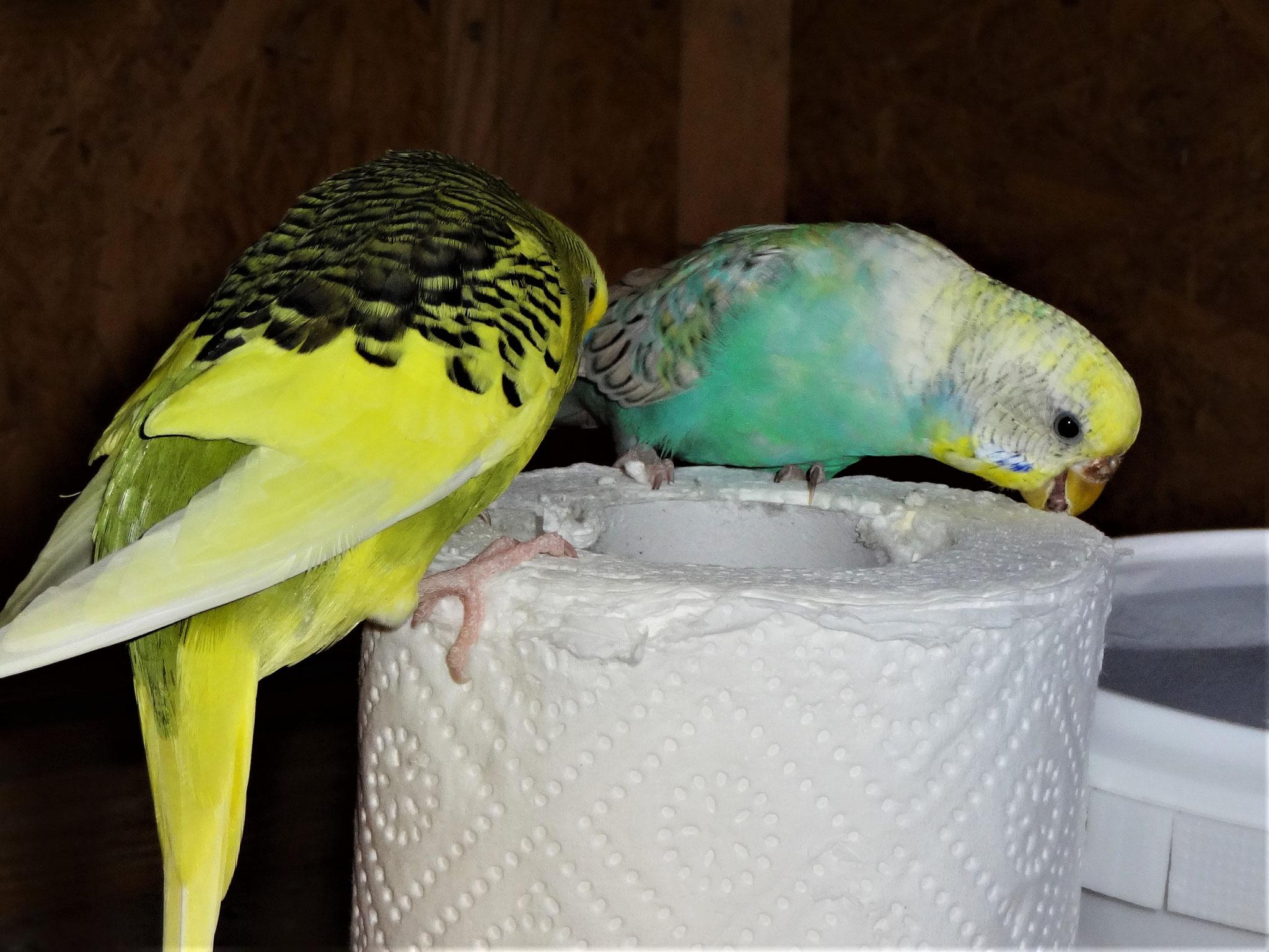 Oscar und Anni