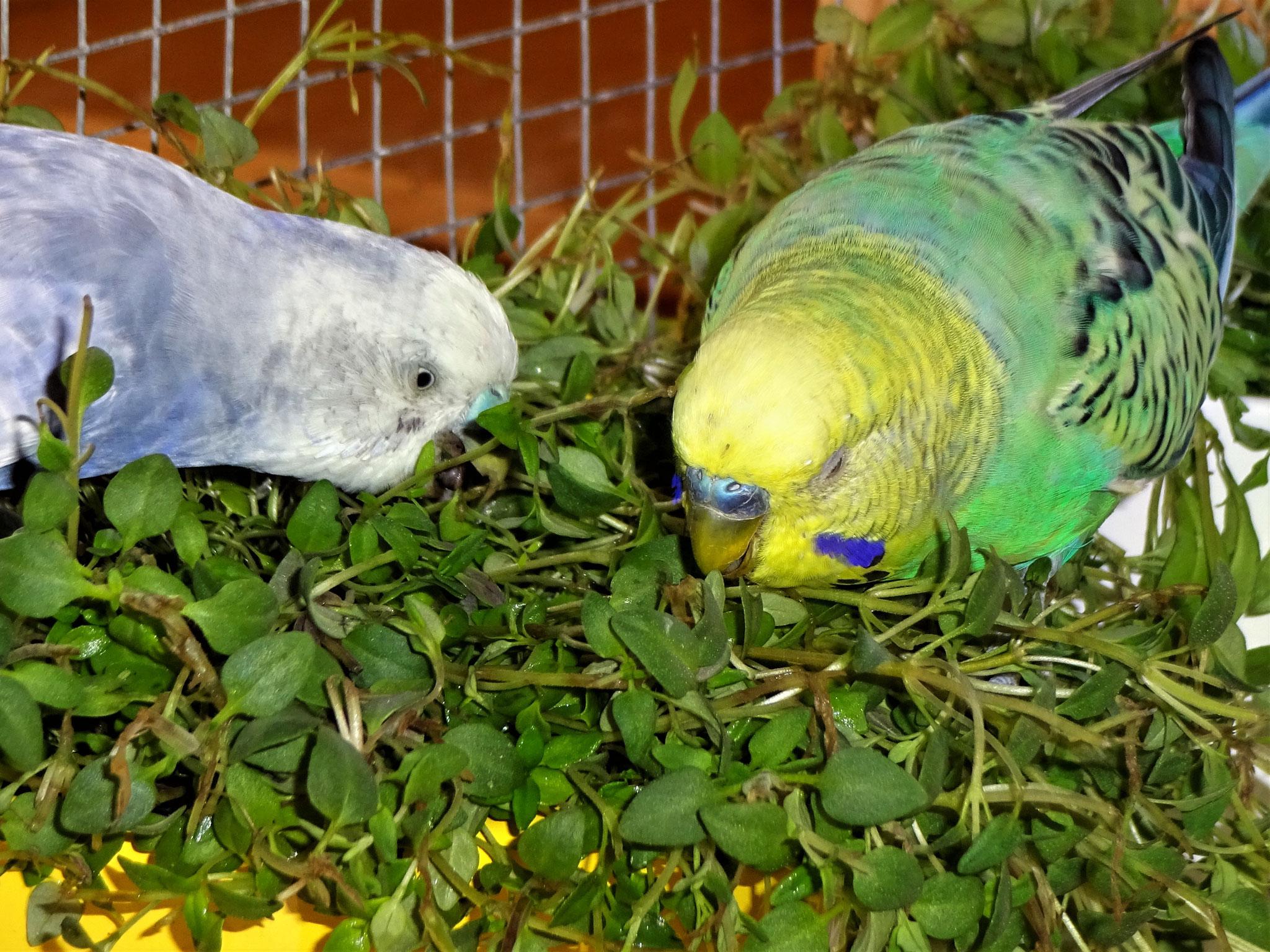 Monty und Smarty