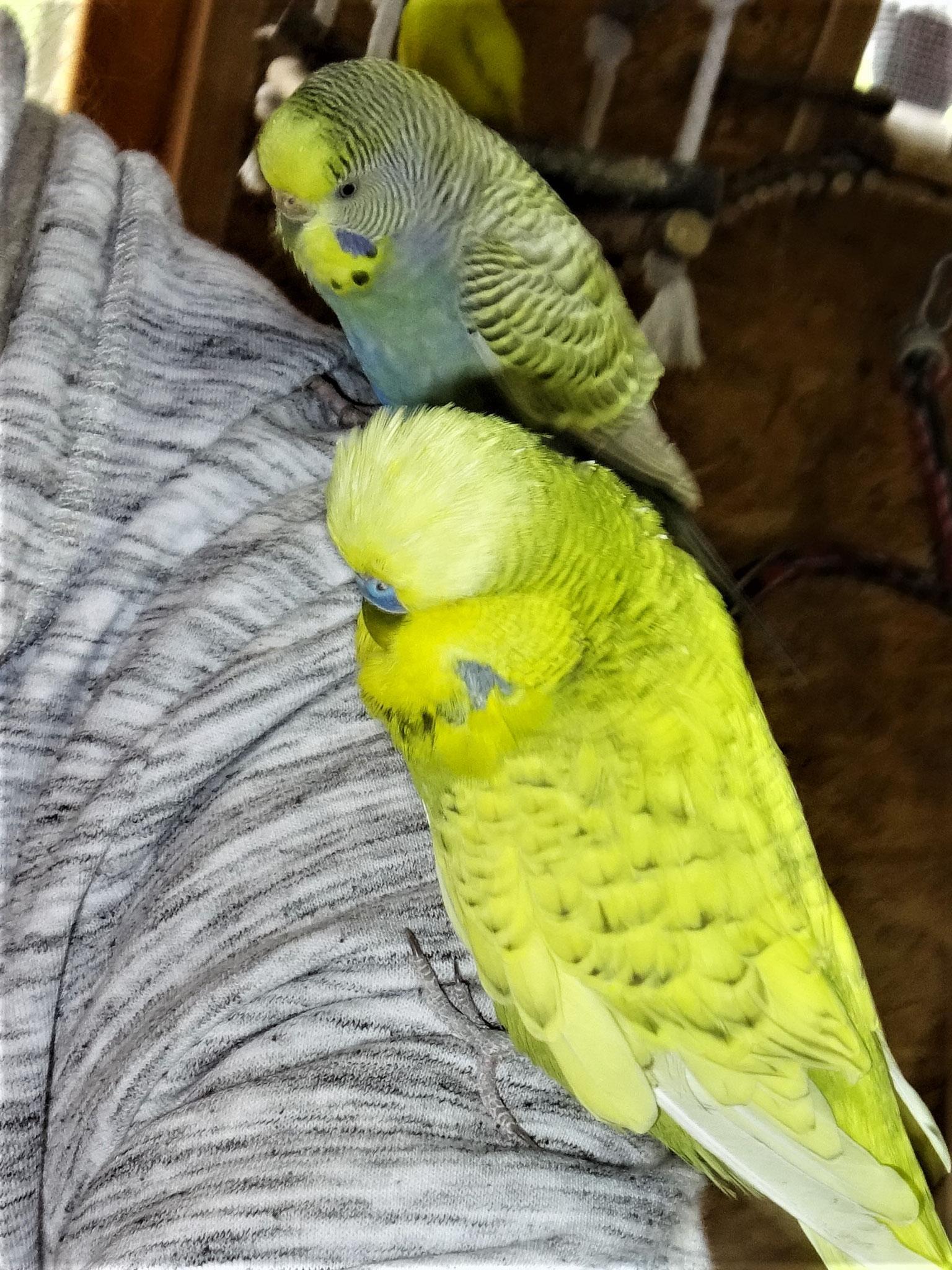 Milow und Tini