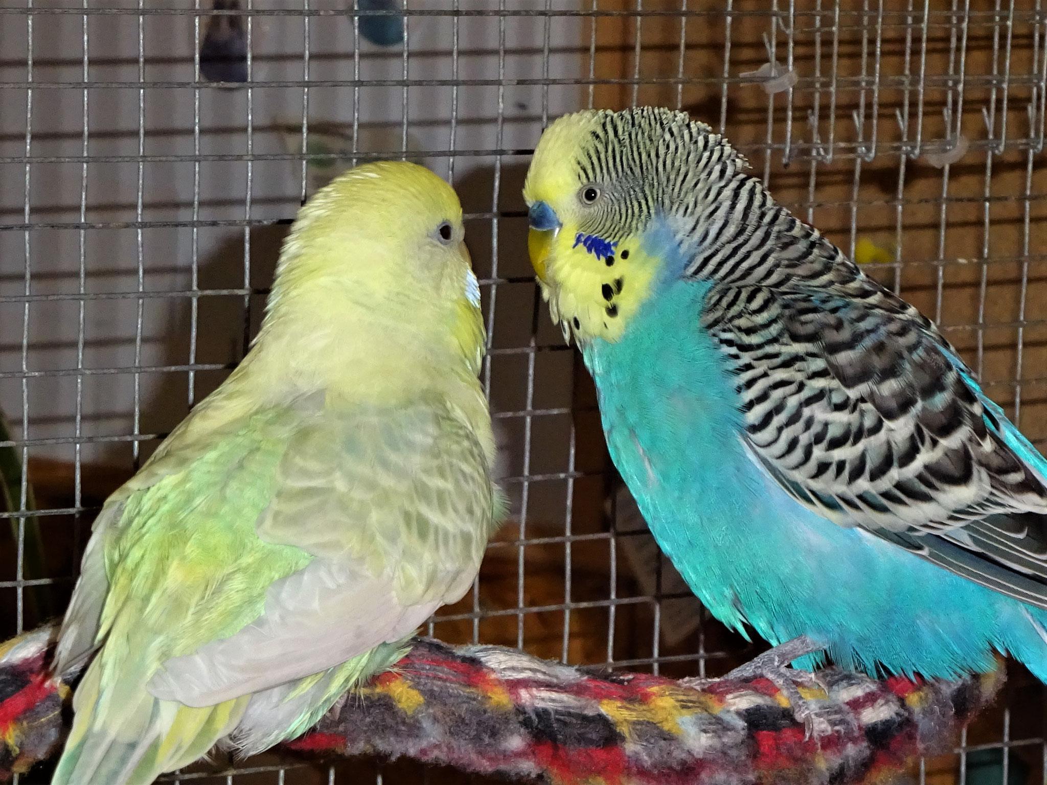 Flocke und Jordy