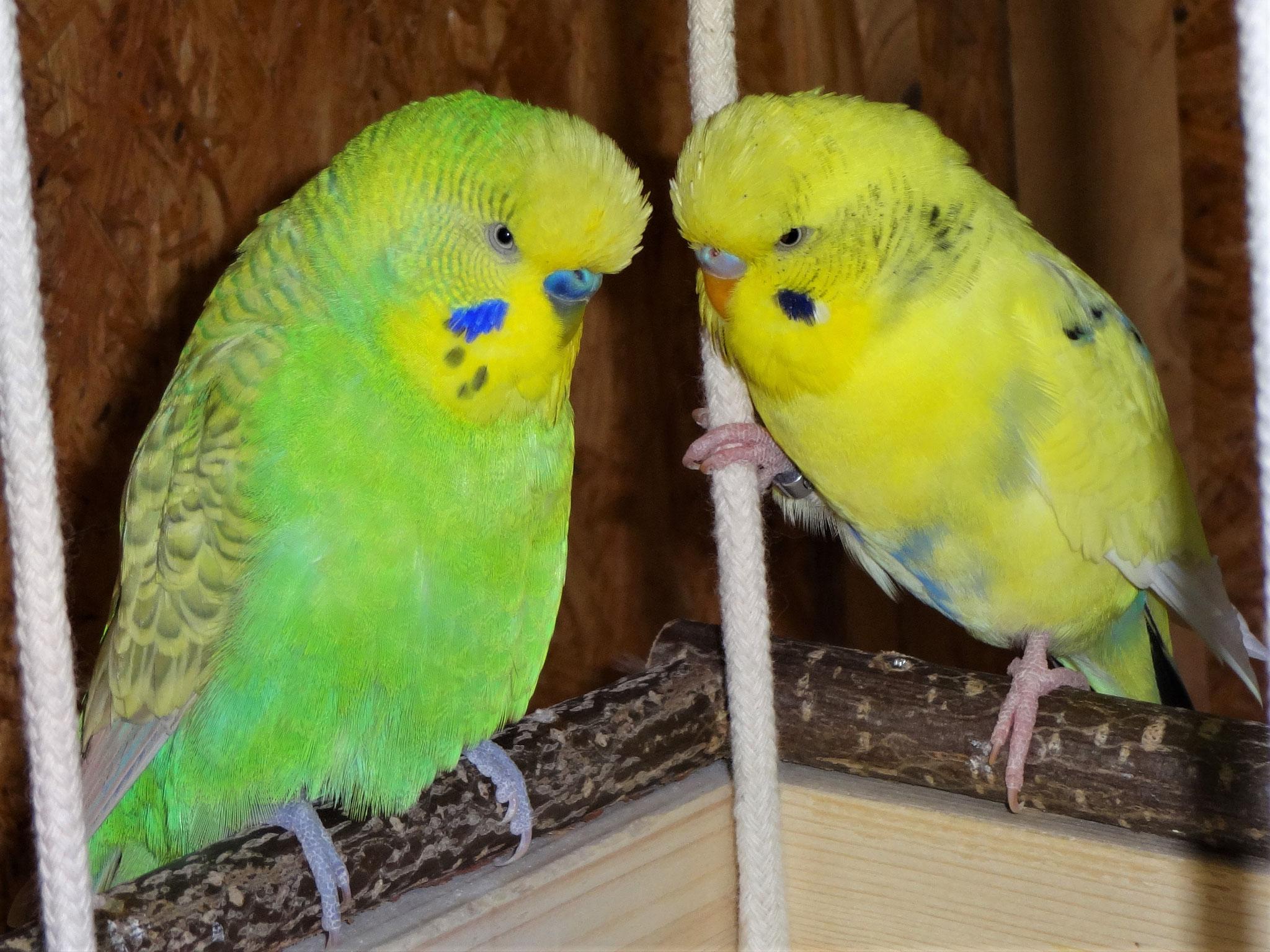 Gute Freunde: Filou und Tommy