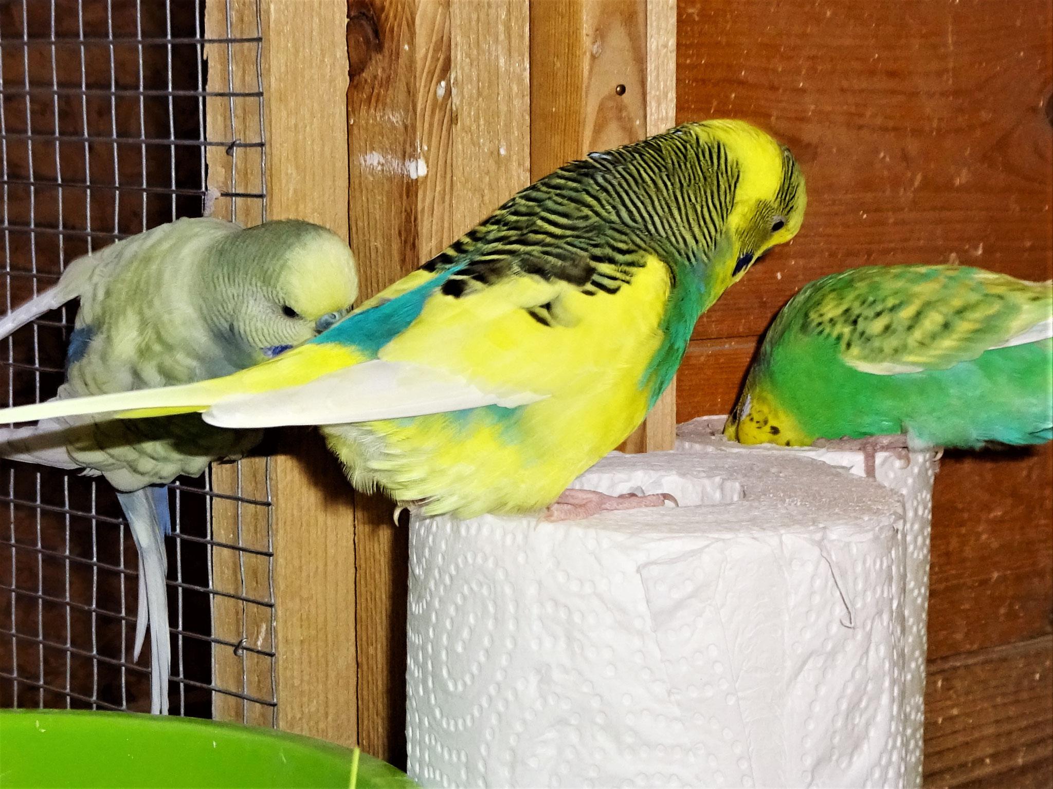 Leroy, Strolchi und Feli